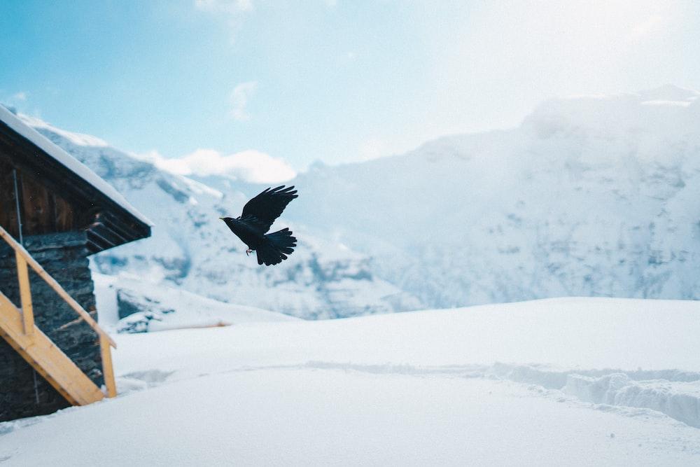 black bird flying on black shed