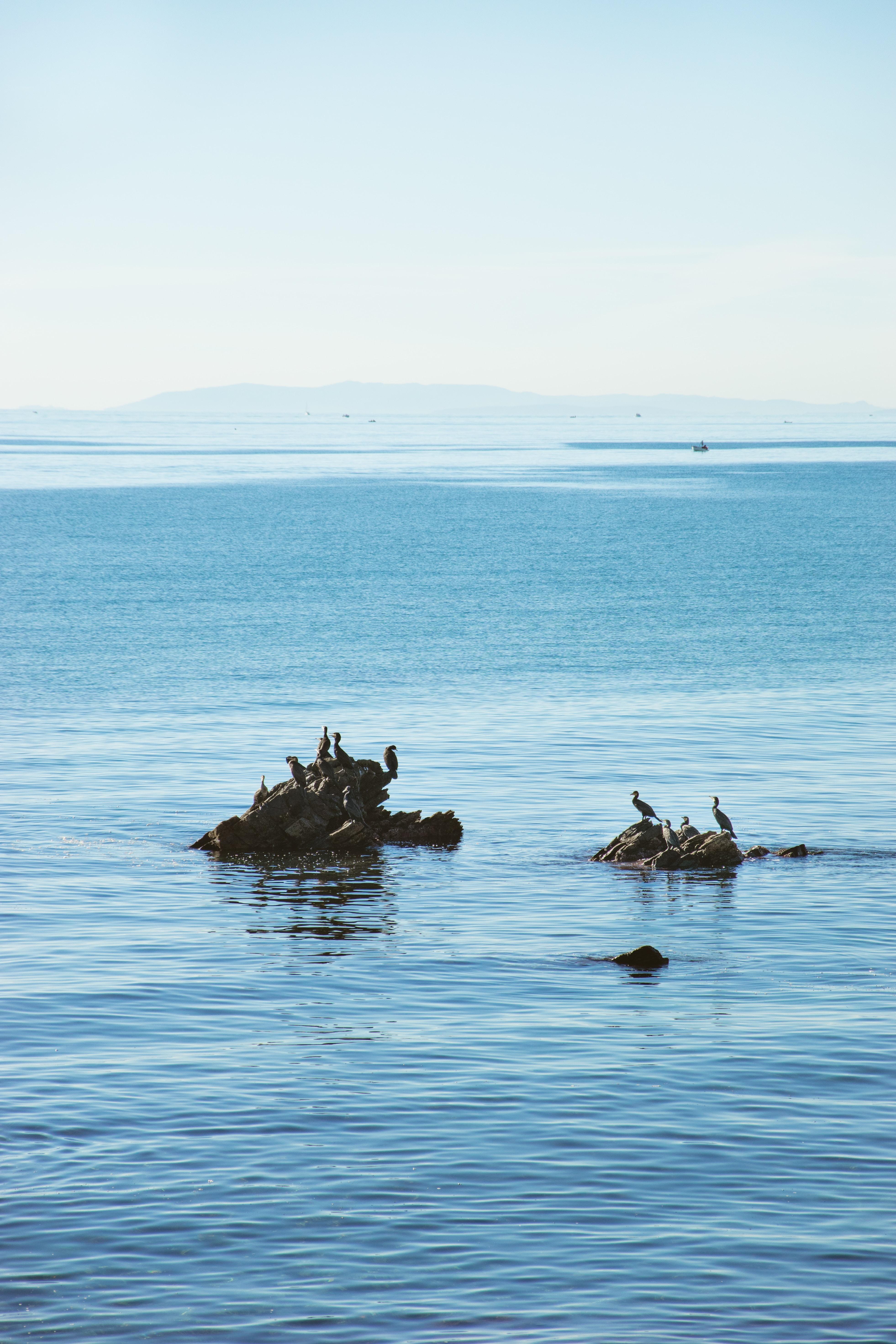flock of birds perching on rock formation
