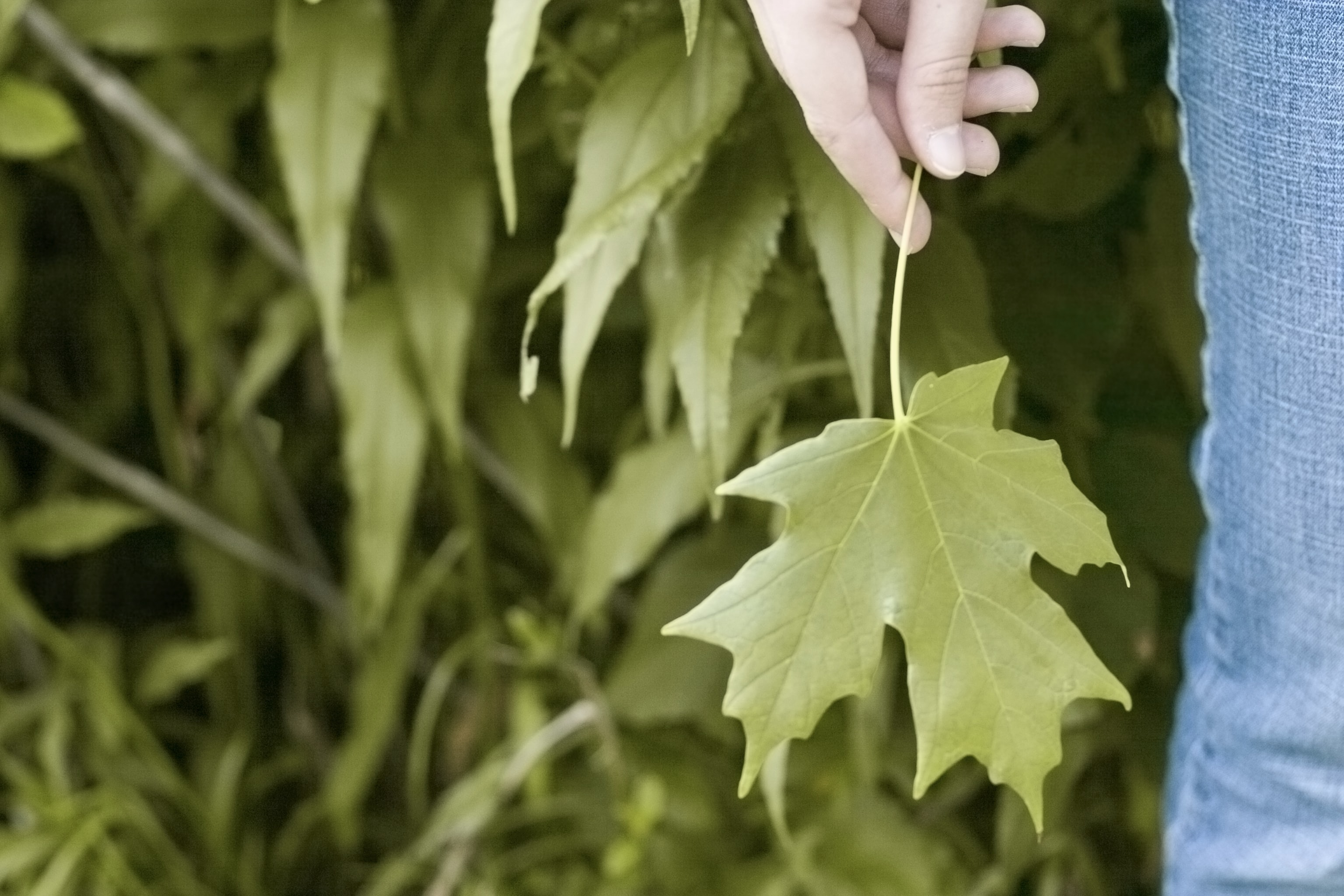 photo of person holding green leaves