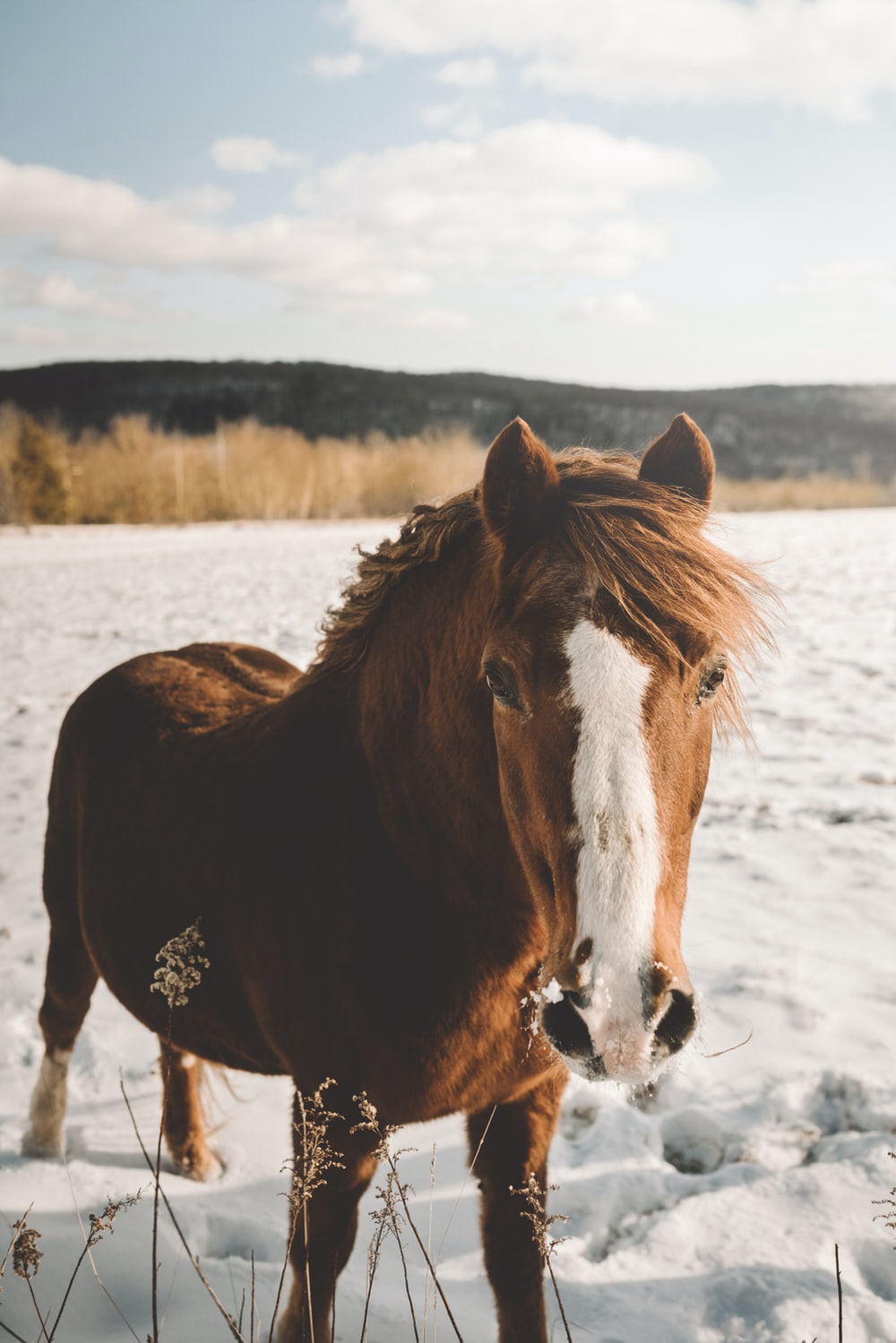 standing brown and white horse on snow during daytime