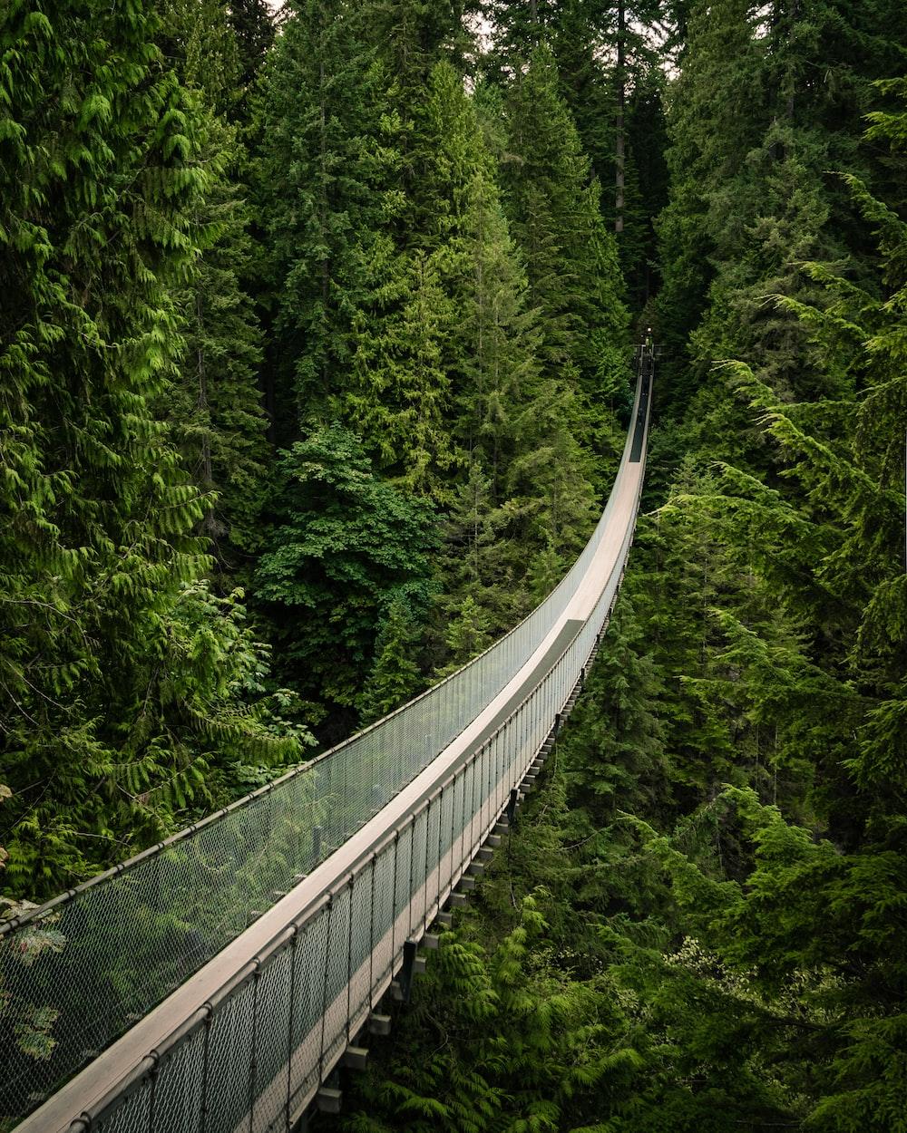 trees between bridge during daytime
