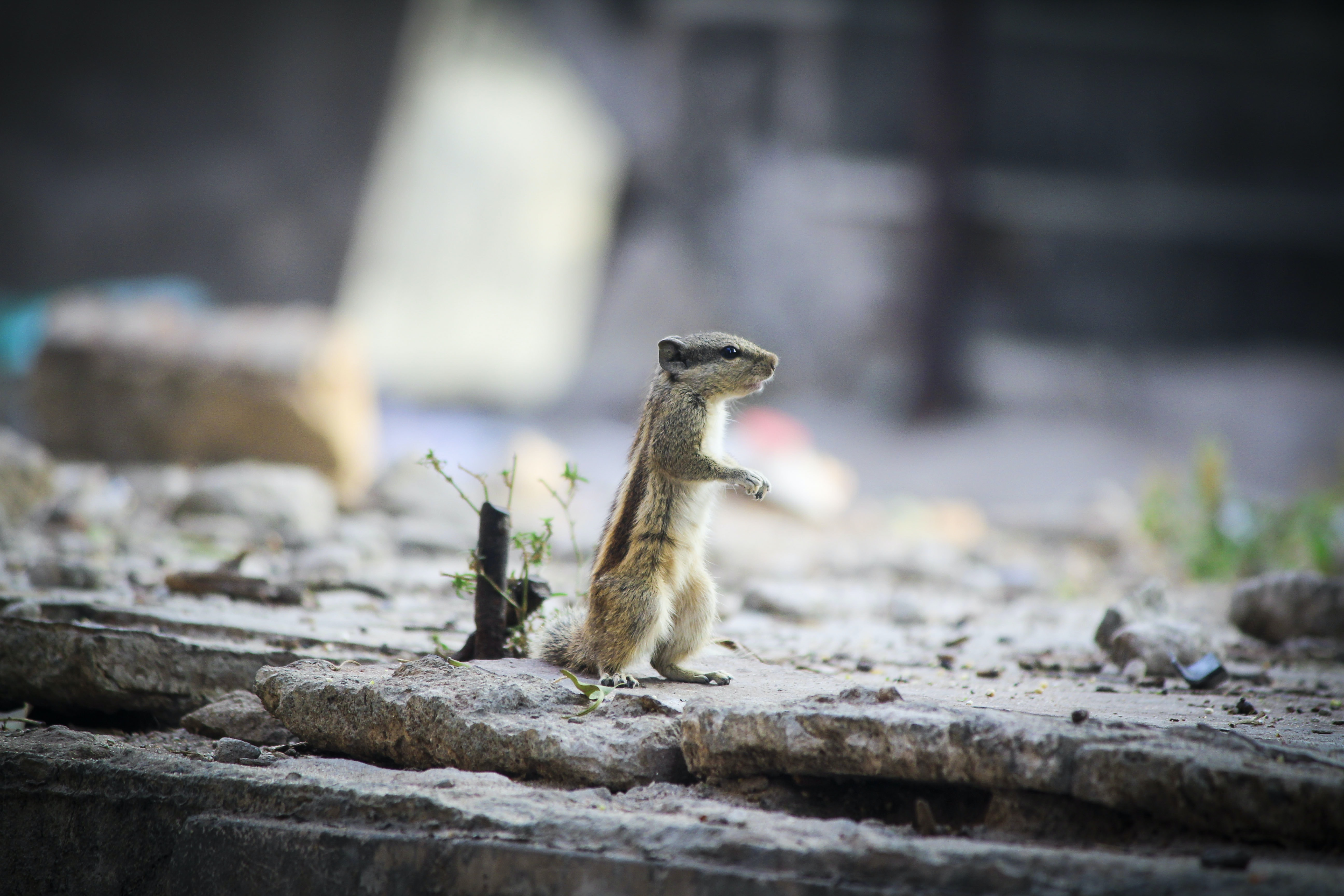 standing squirrel beside green plant during daytime