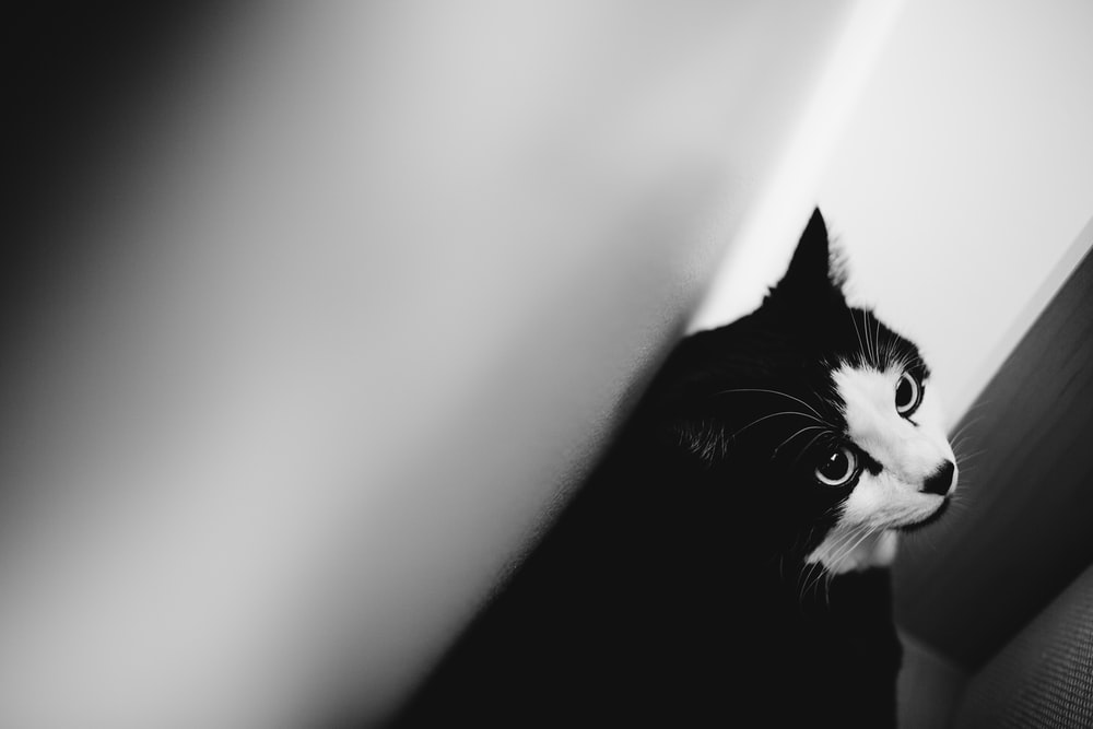 black and white cat standing beside white wall