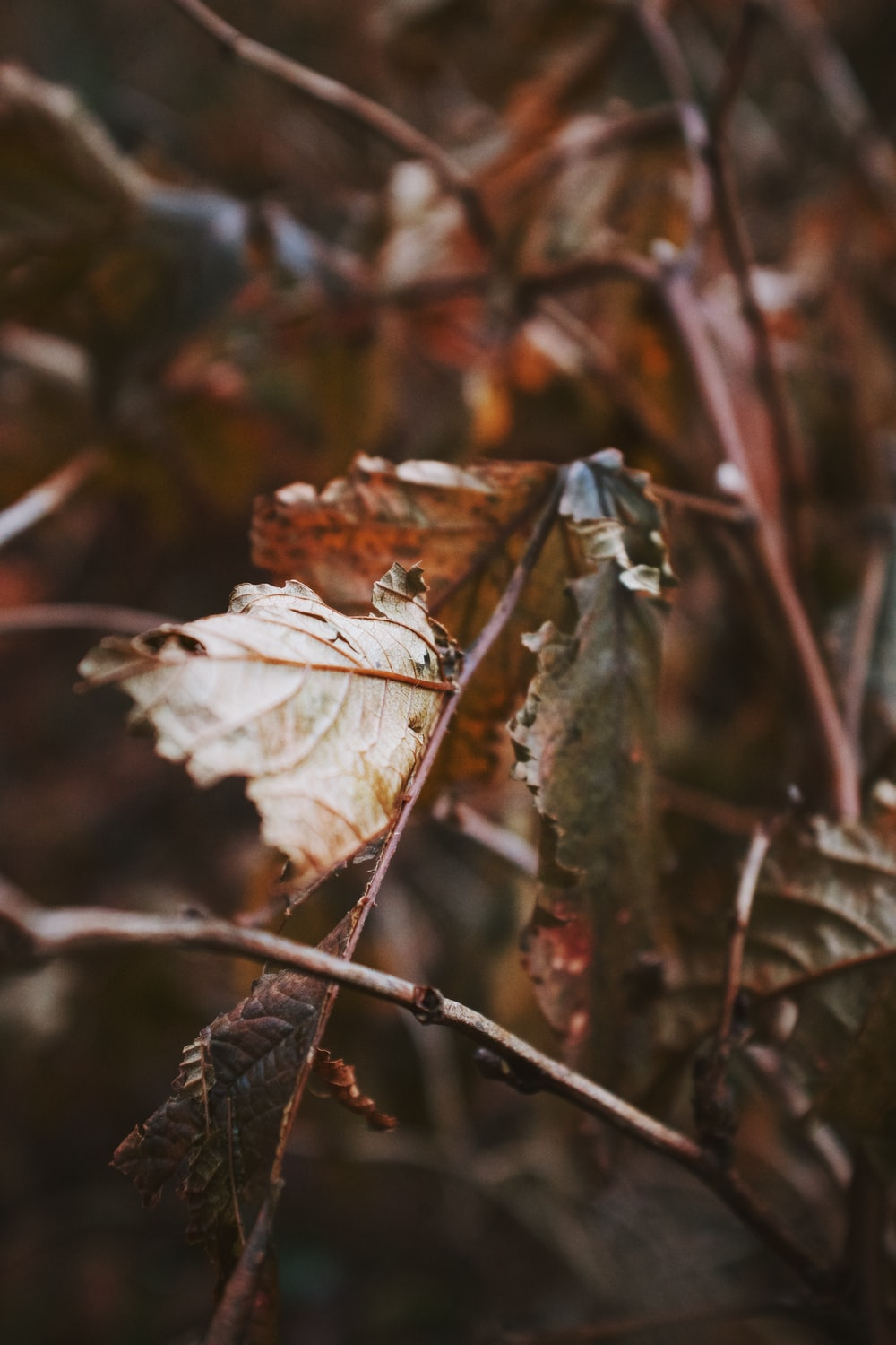 shallow focus photography of brown dried leaves