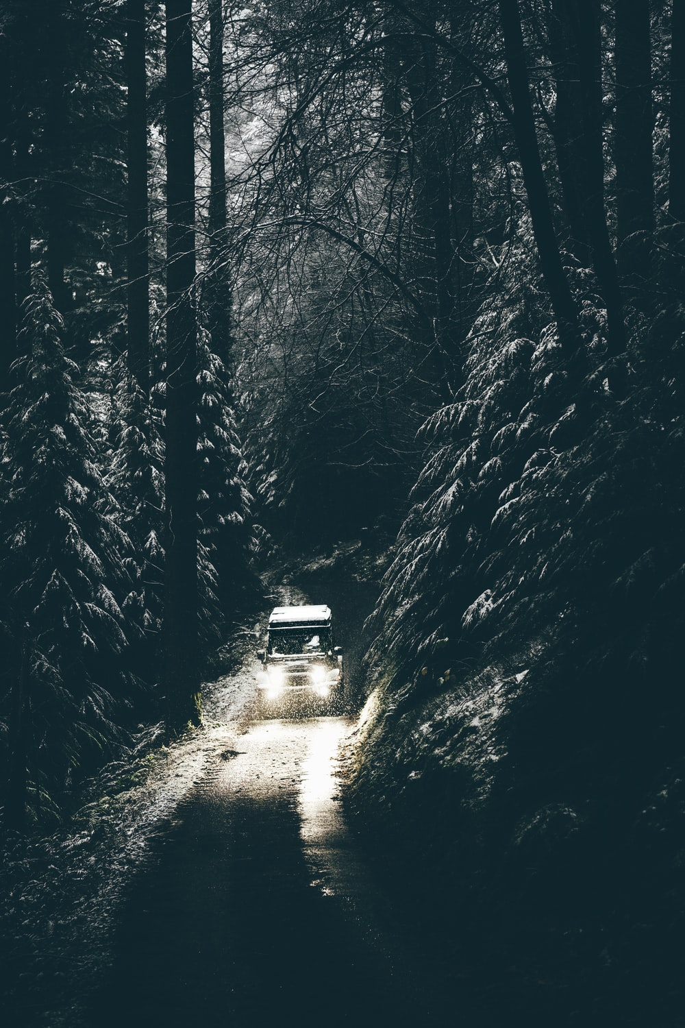 grayscale photo of vehicle between trees