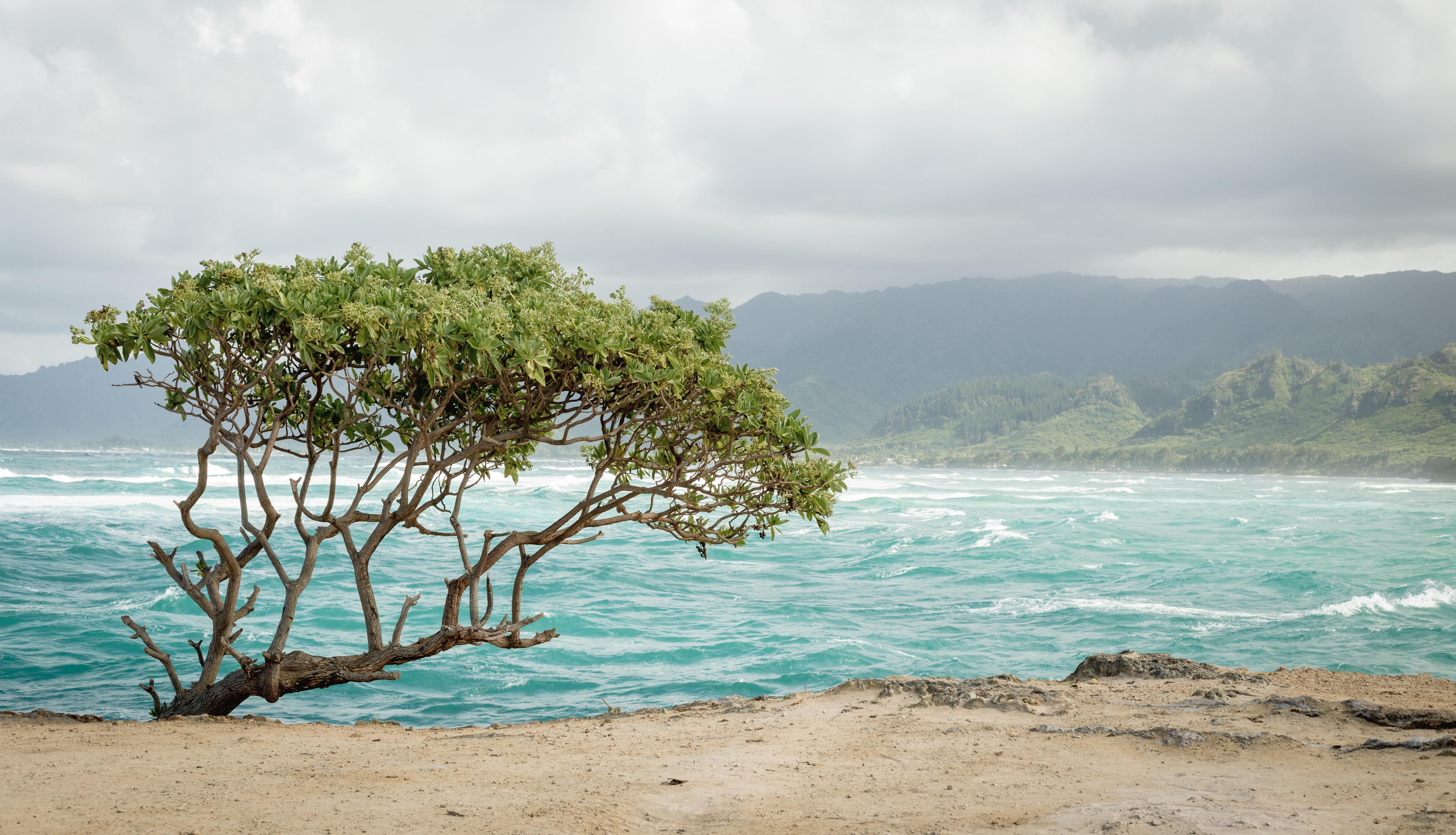 green tree near seashore