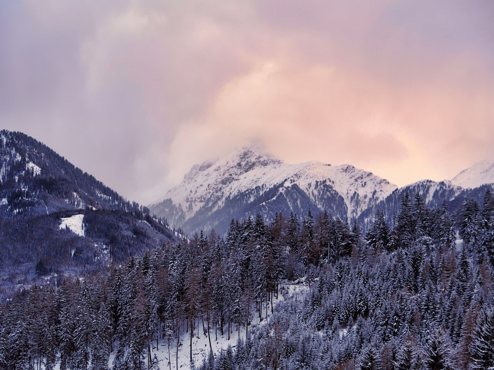 aerial photography of mountain with trees covered with snow