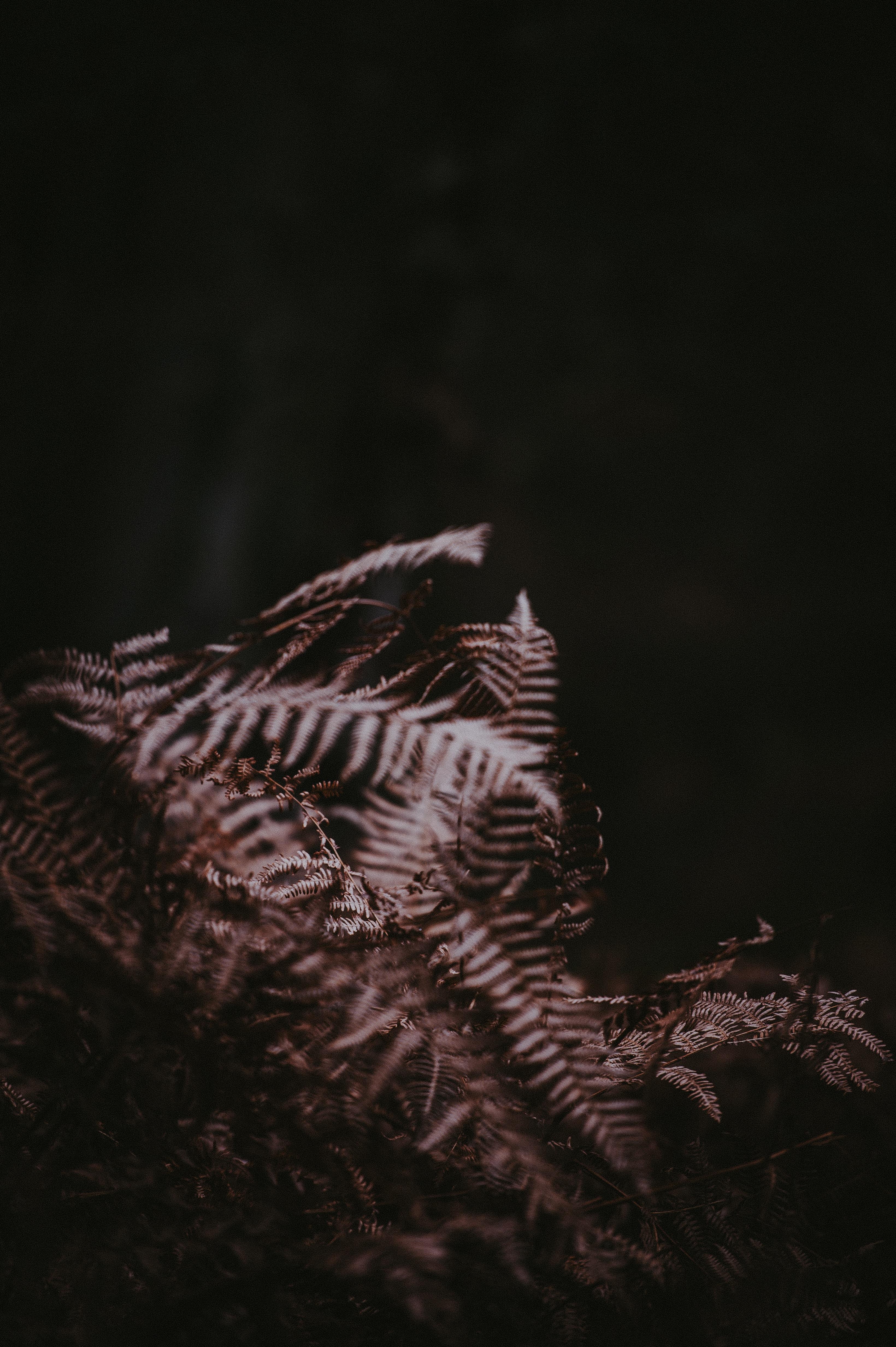 grey fern plant