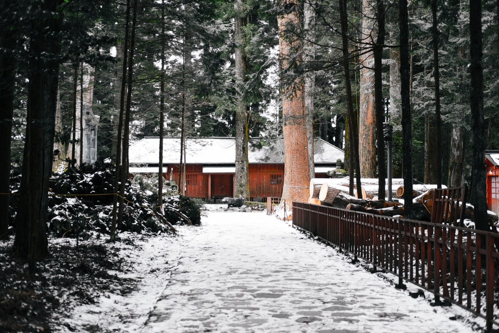 brown wooden house surrounded by trees at daytime