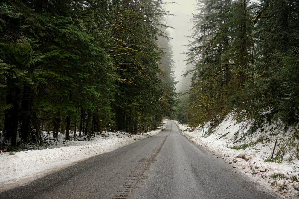 road surrounded by pine trees during daytime