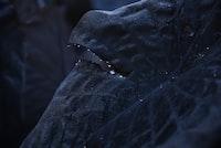 closeup photo of black leafed plant