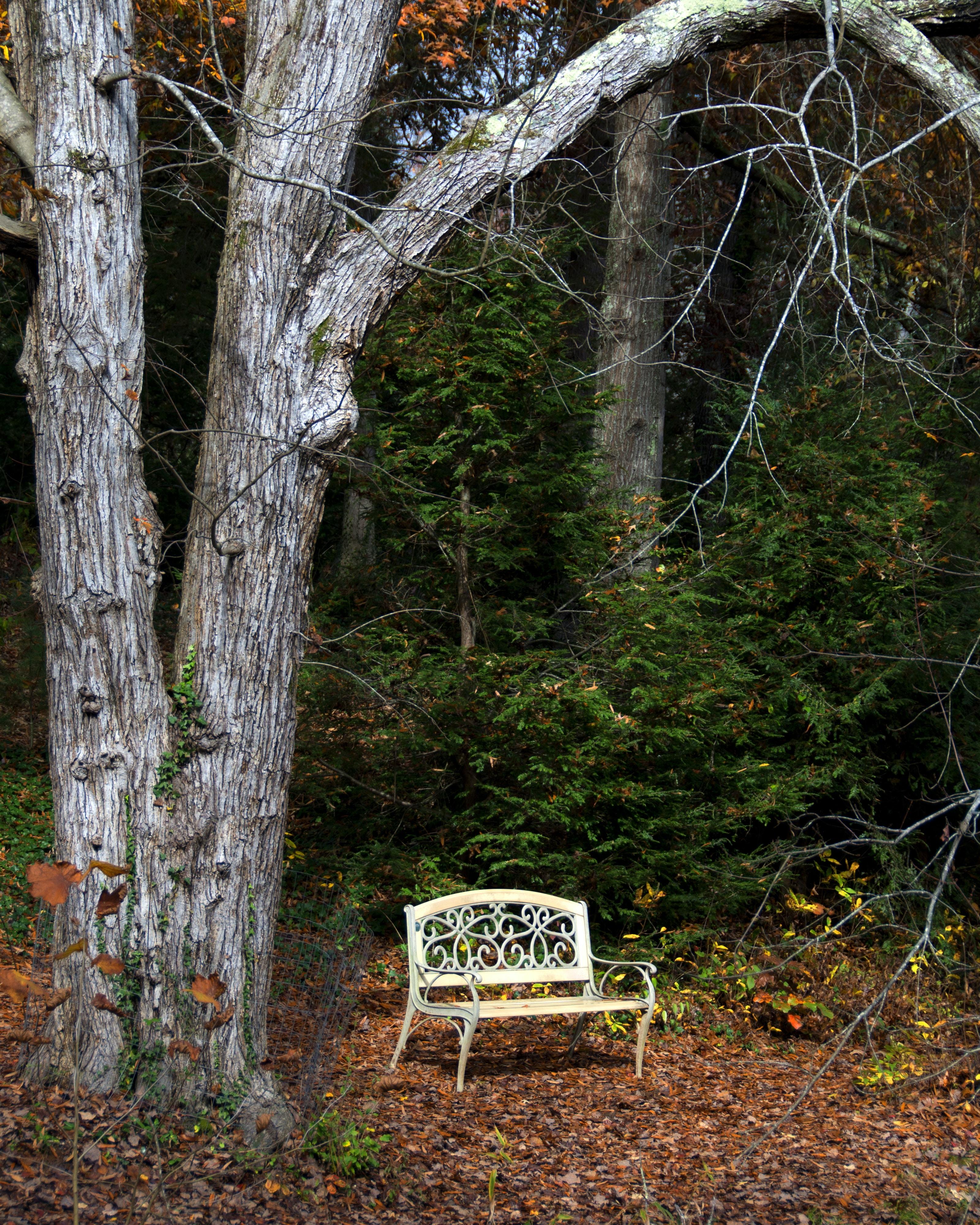 white steel bench under tree near green plants during daytime