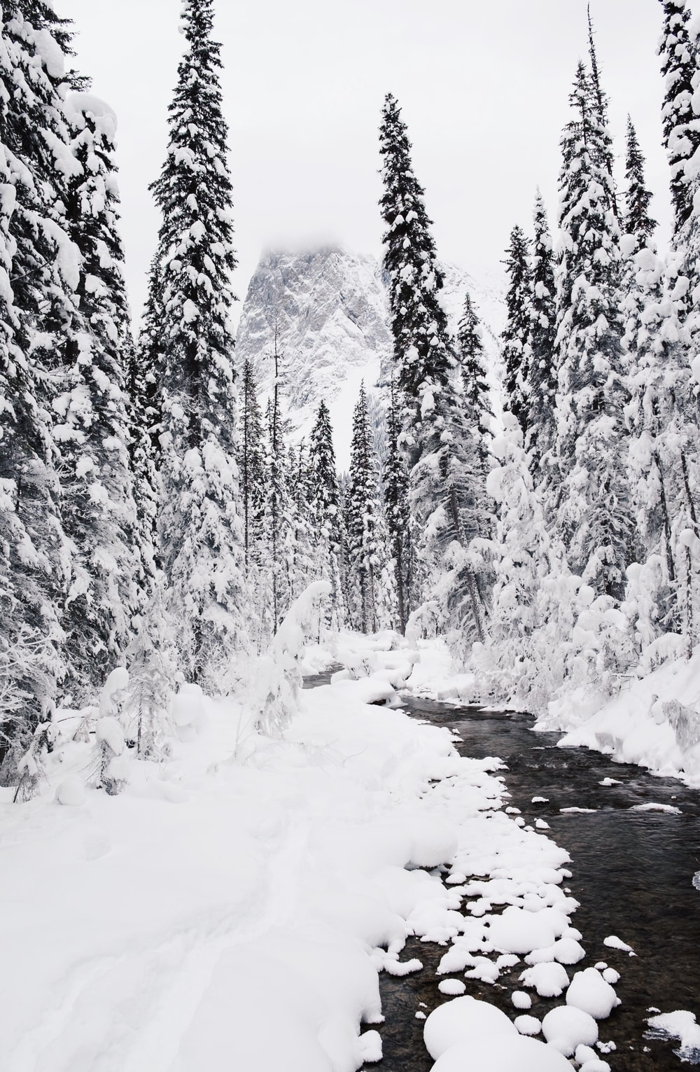 body of water coated snow center of pine trees