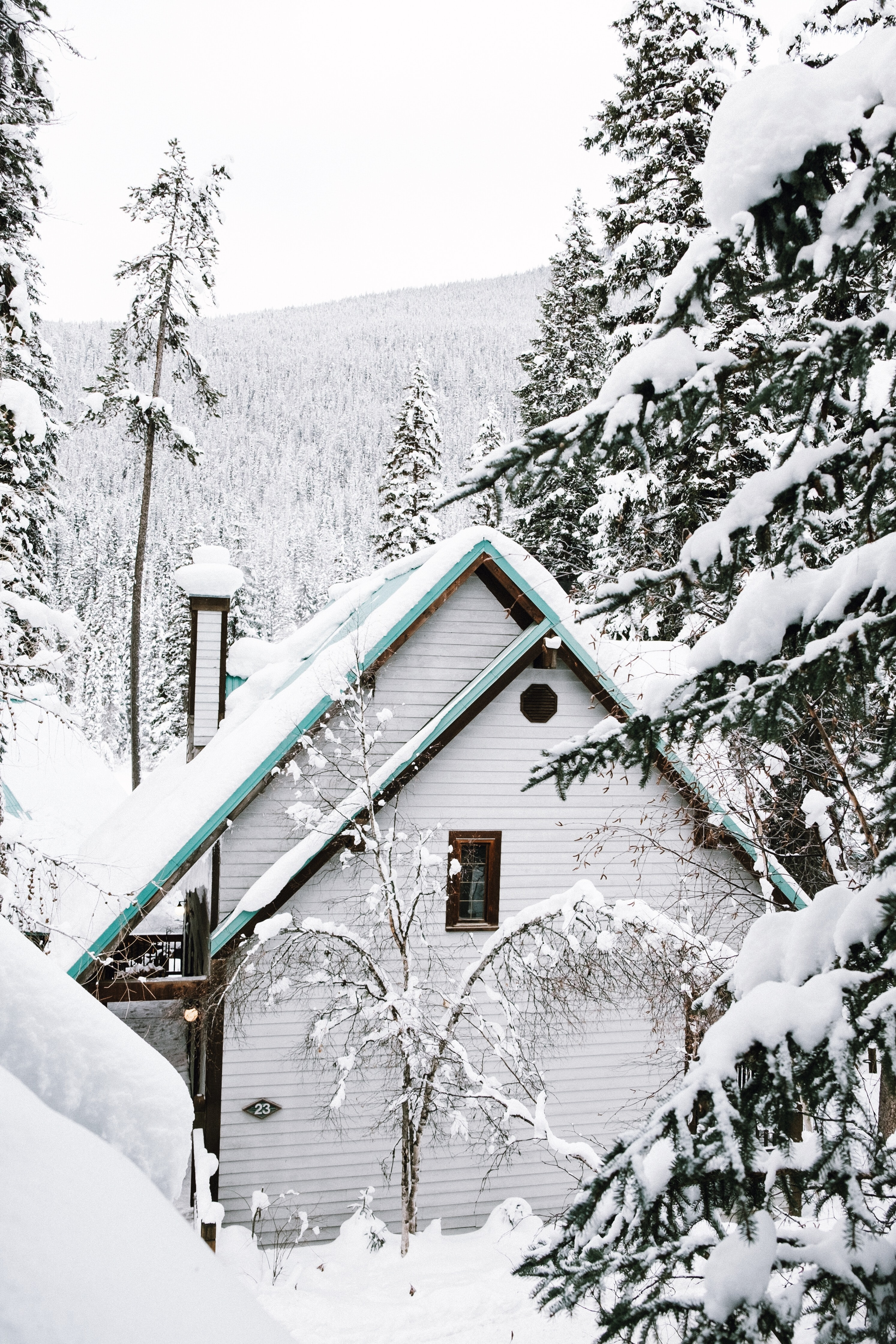 white wooden house near trees covered with snow