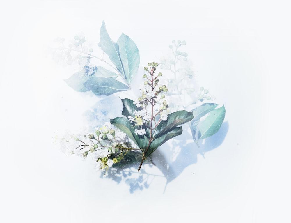 white flowering plant artwork
