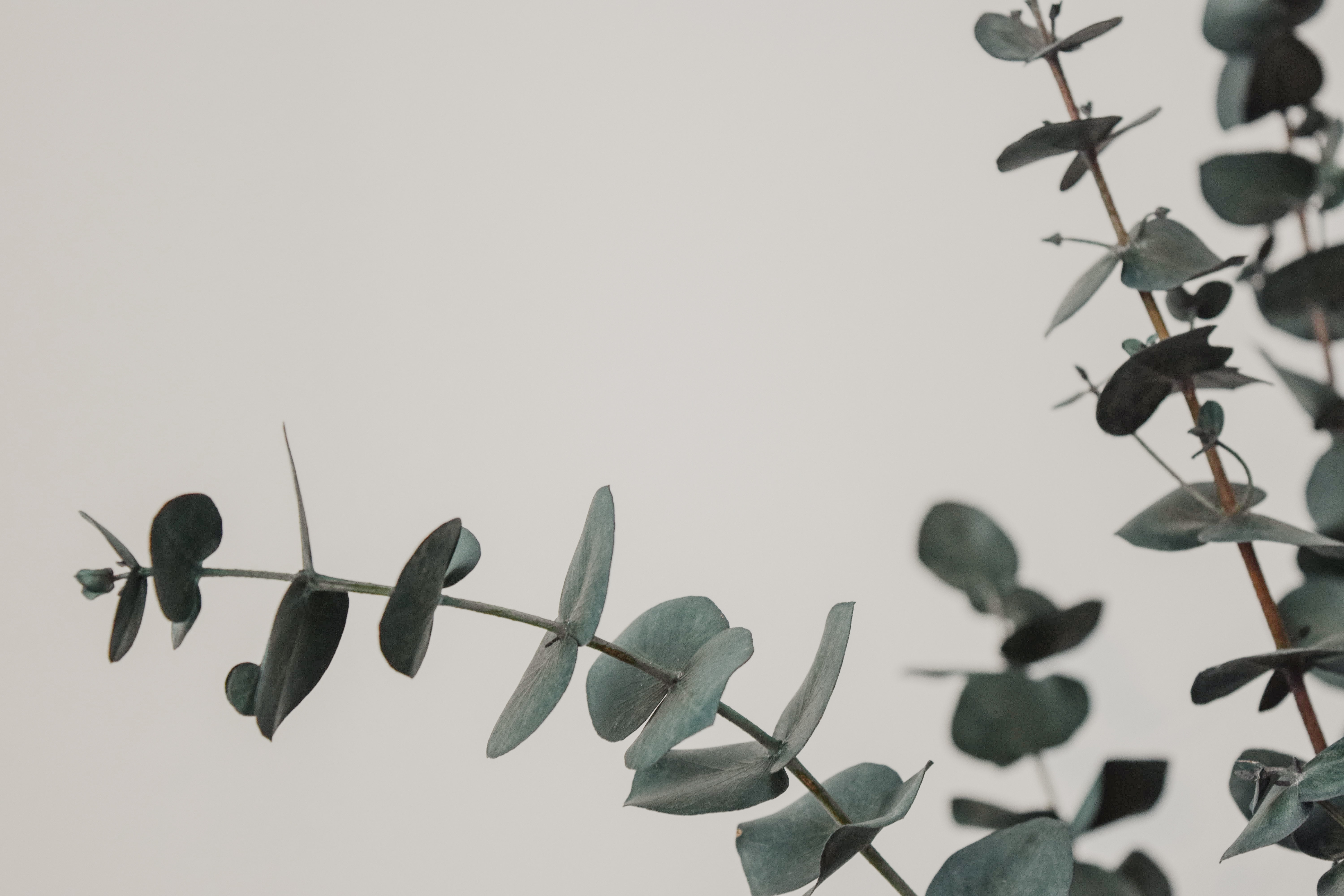 green leafed plant in close-up photography