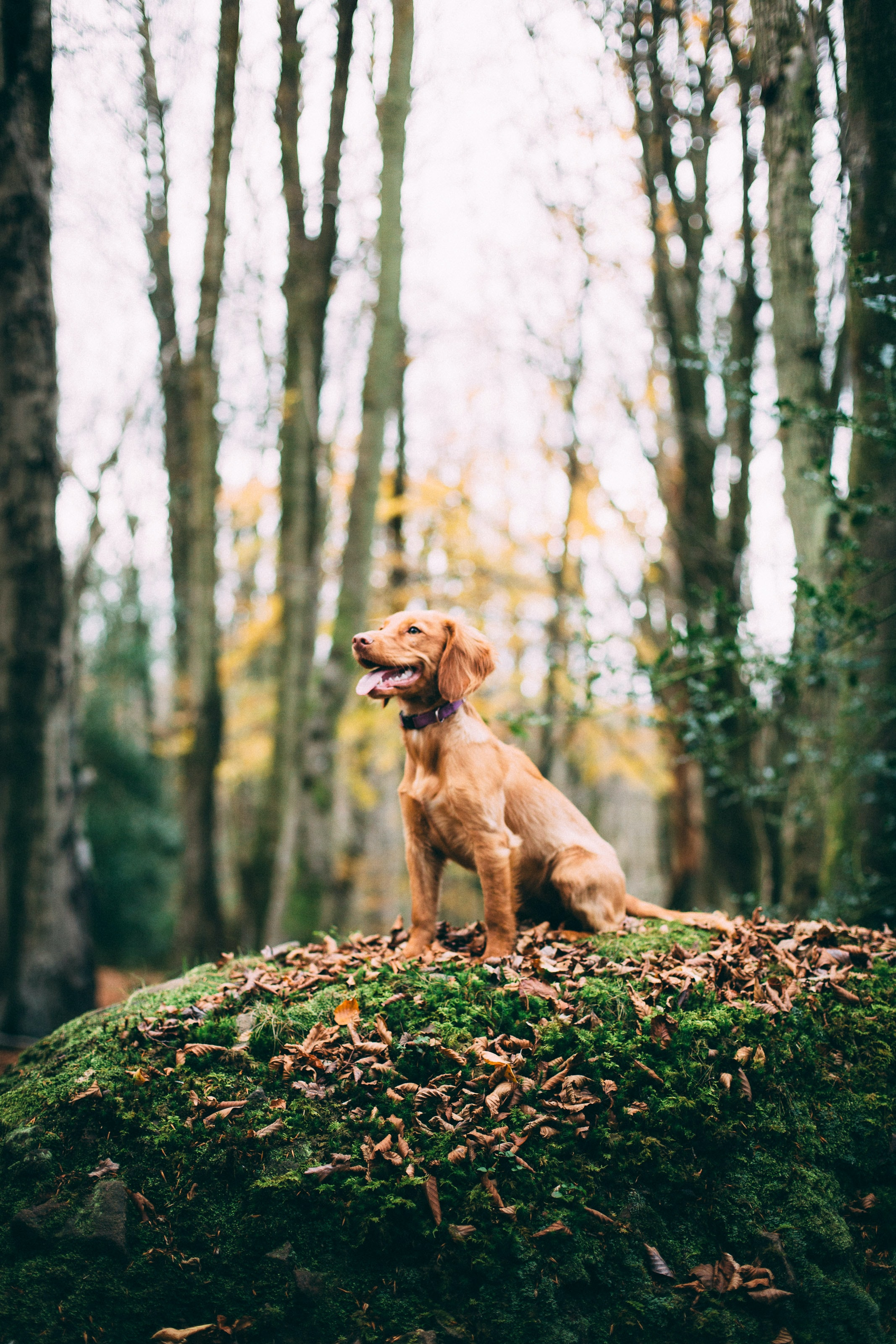 shallow focus photography of dog