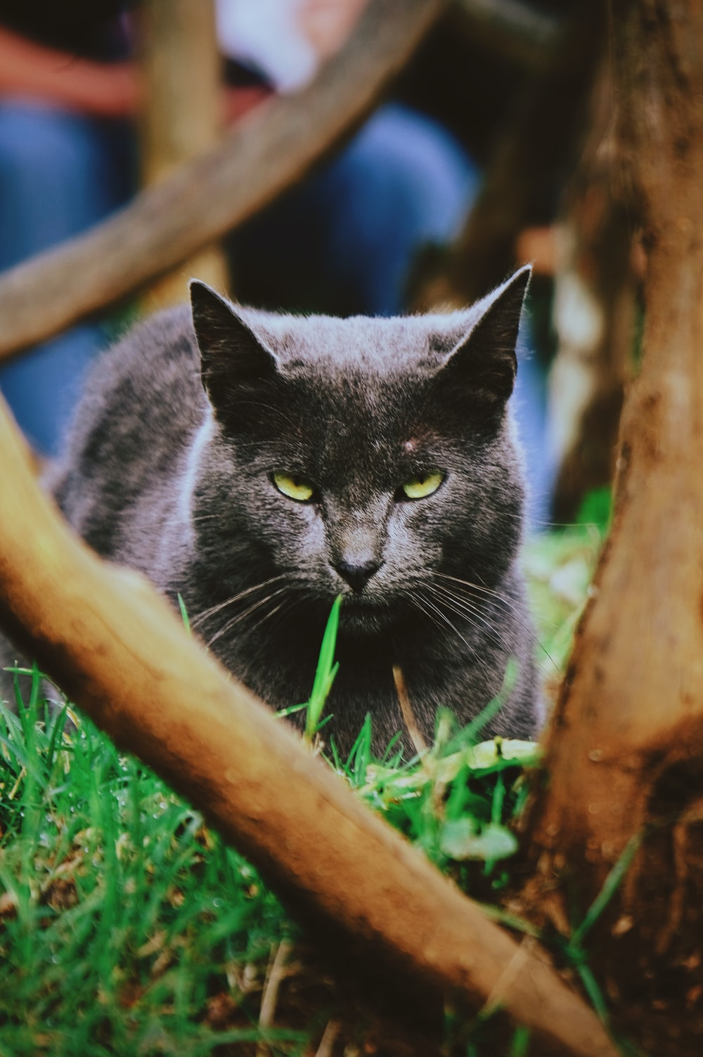 shallow focus photography of black cat lying on grass