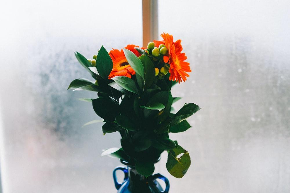 orange flowers on blue vase near glass panel