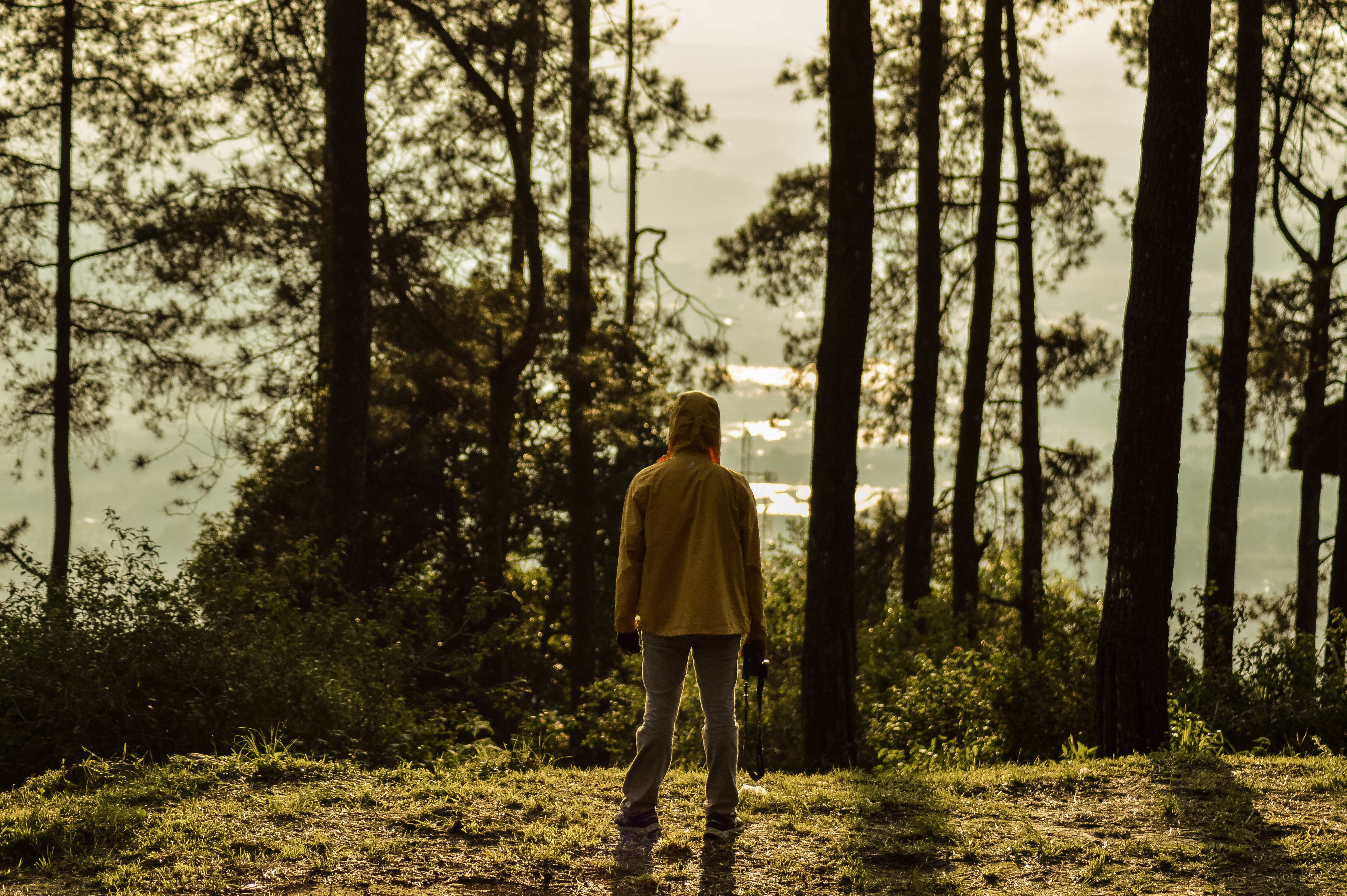 man facing trees