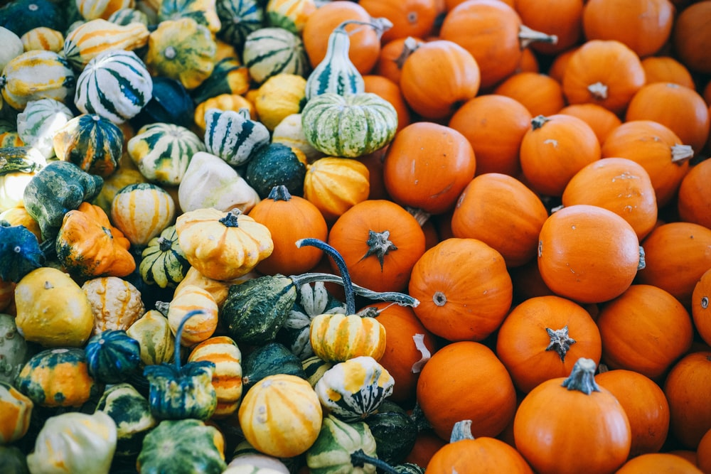 macro photography of assorted squash lot
