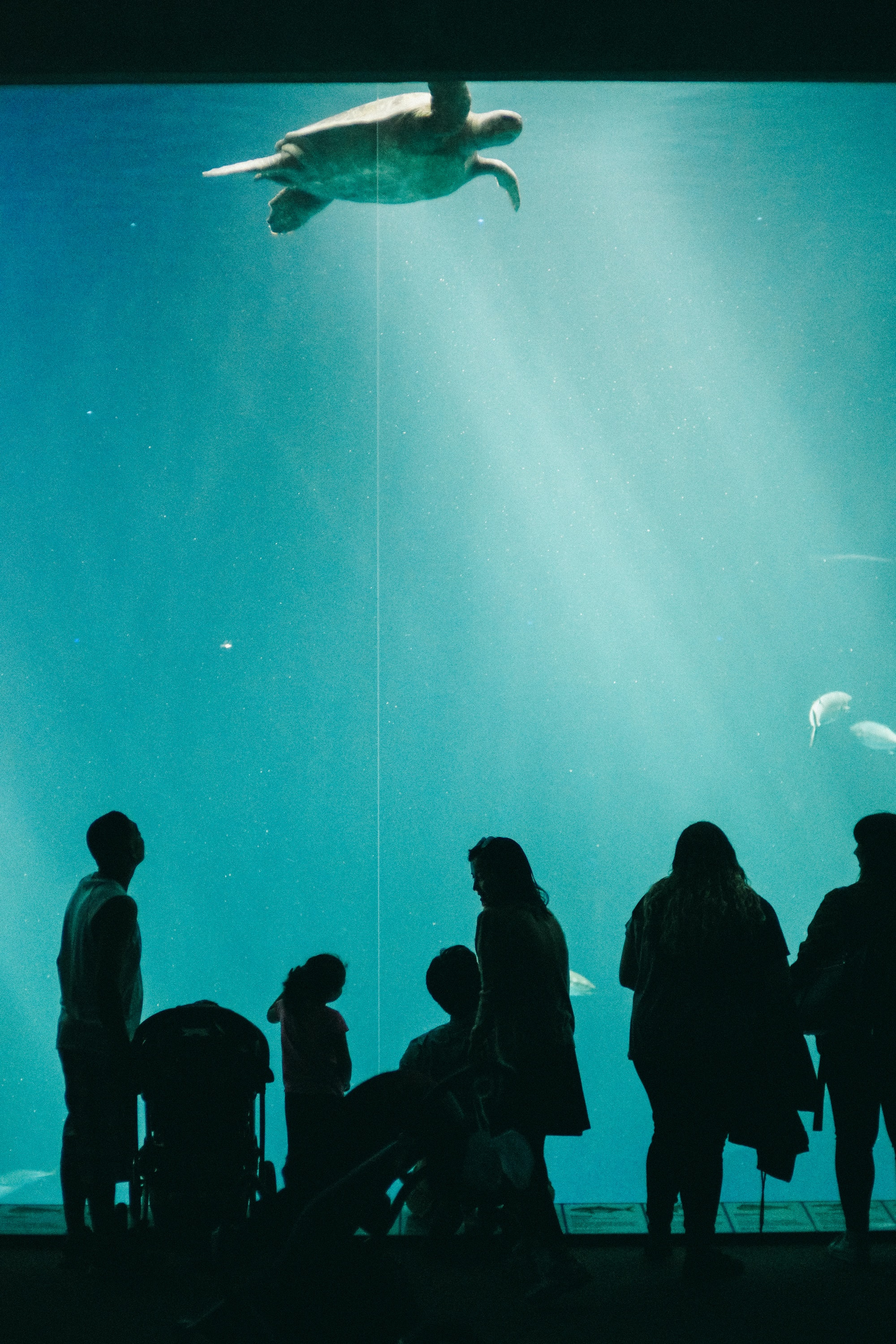 people looking at turtle swimming inside dome water museum