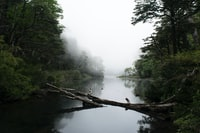 river surrounded by trees and covered in white fog