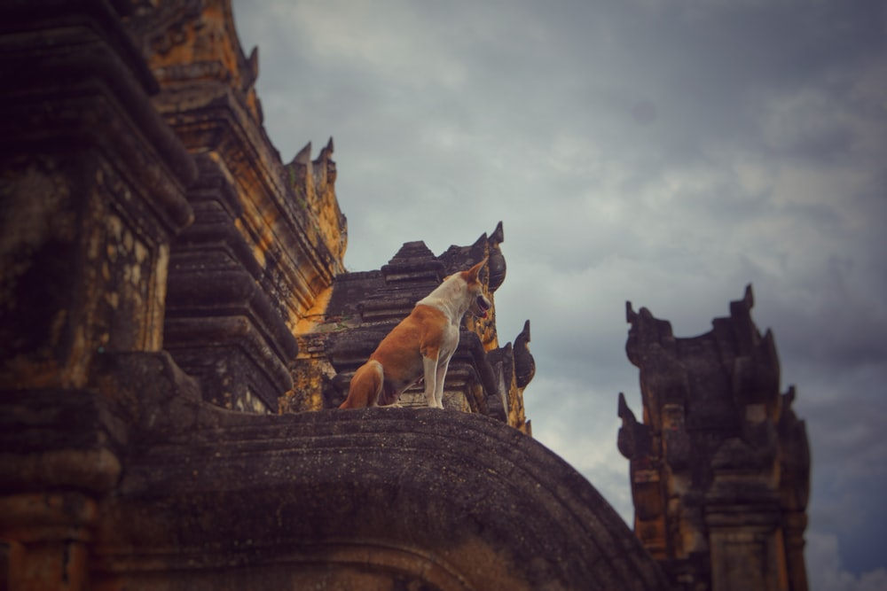 photo of dog sitting on pillar
