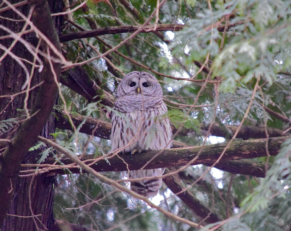 gray owl on brown tree branch