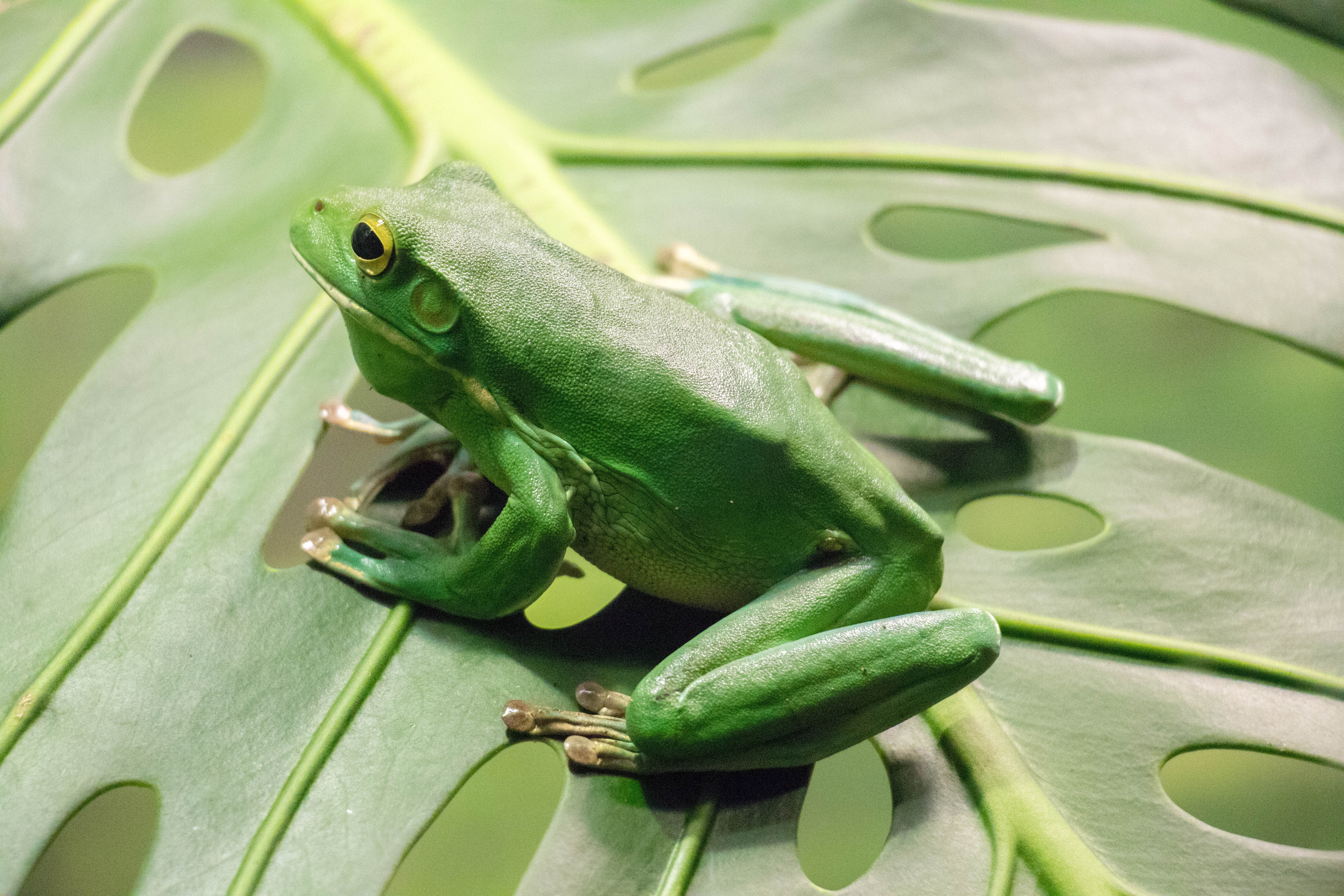 close up photography of green frog