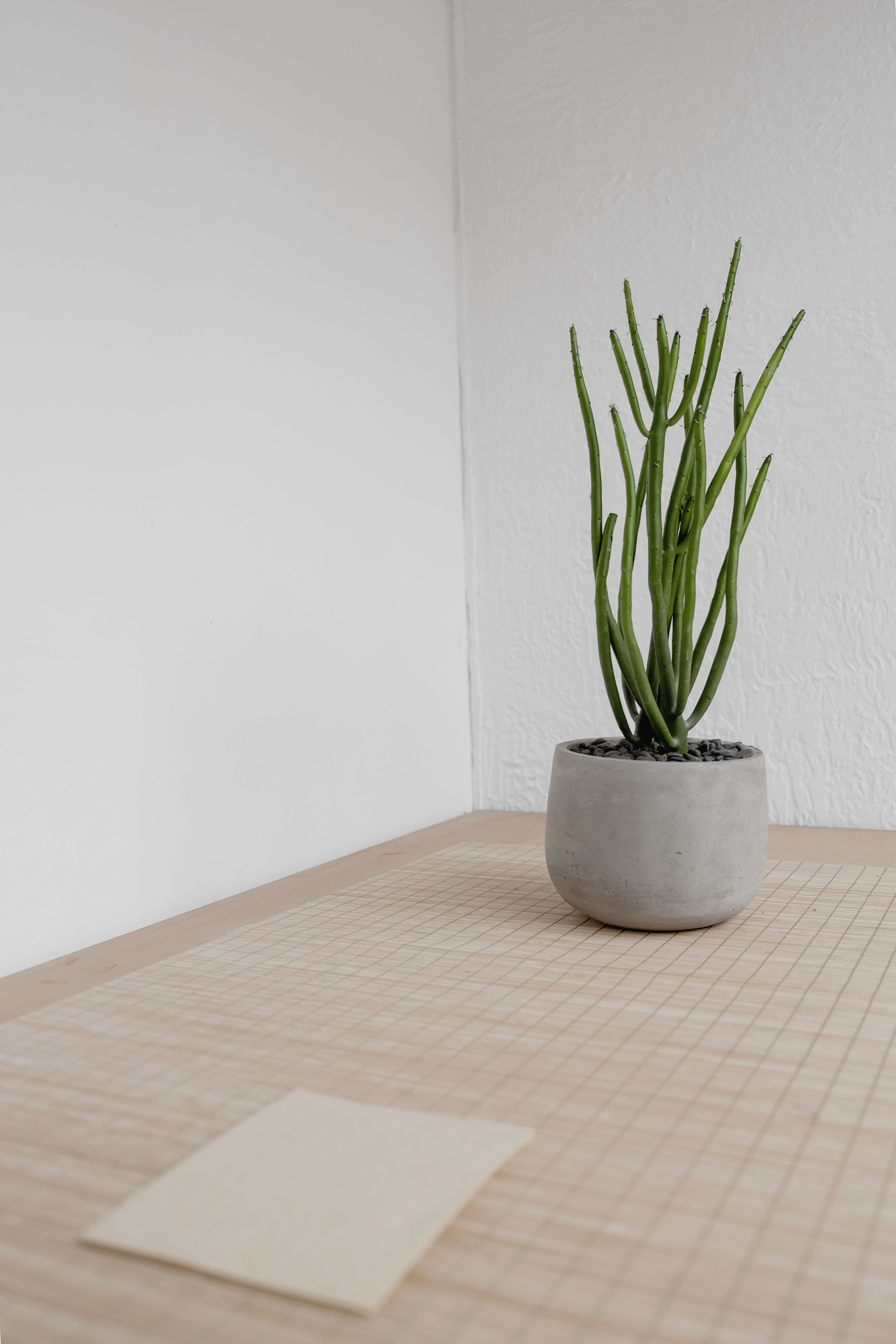 green cactus plant near wall