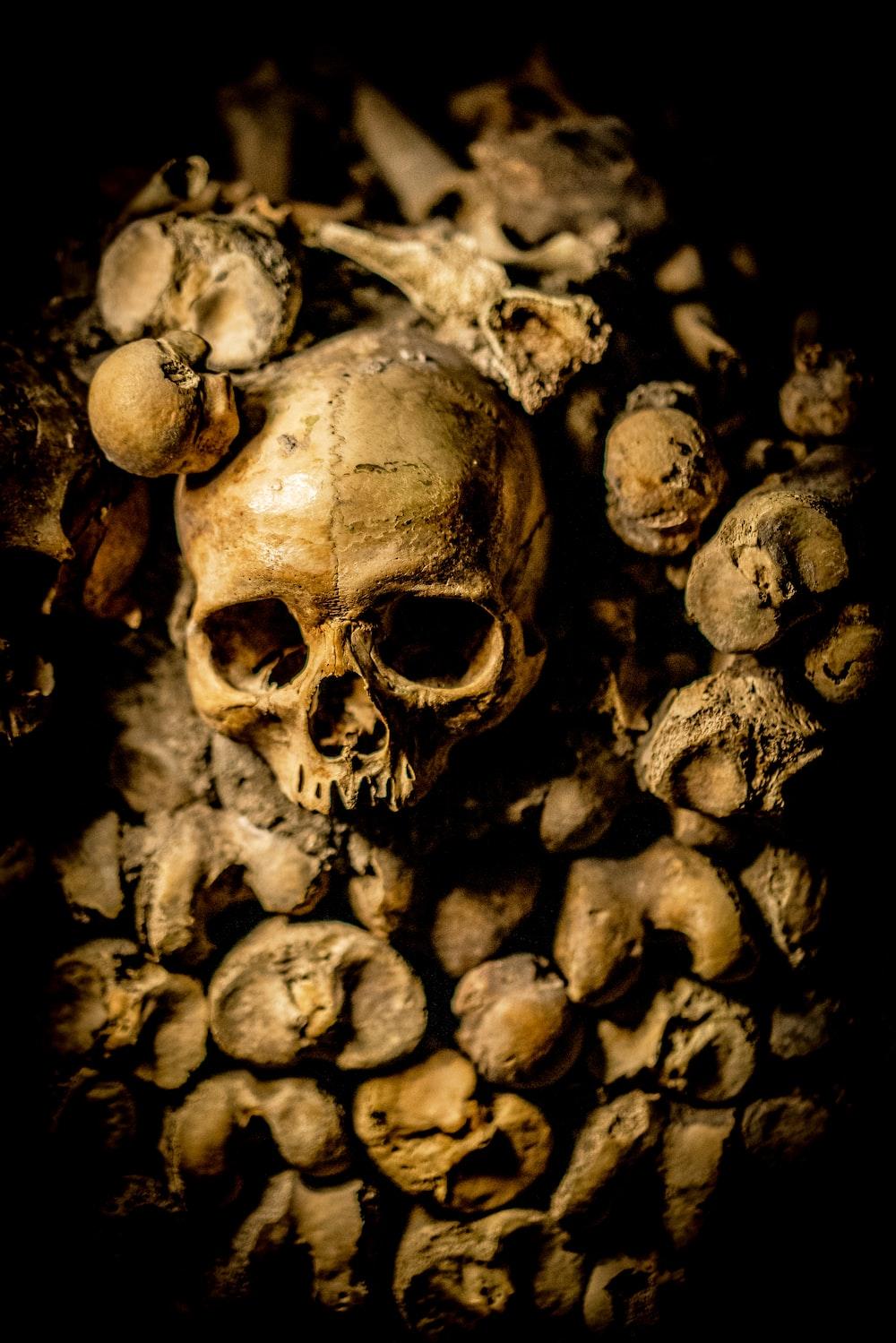 closeup photo of skull