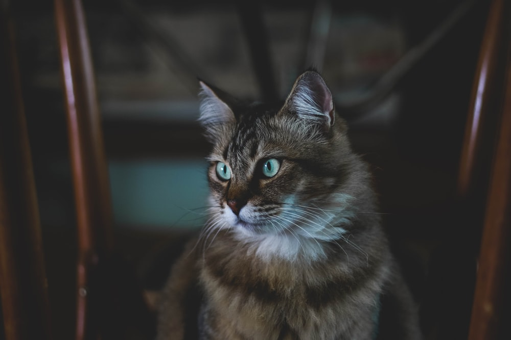 shallow focus photography of brown and black cat