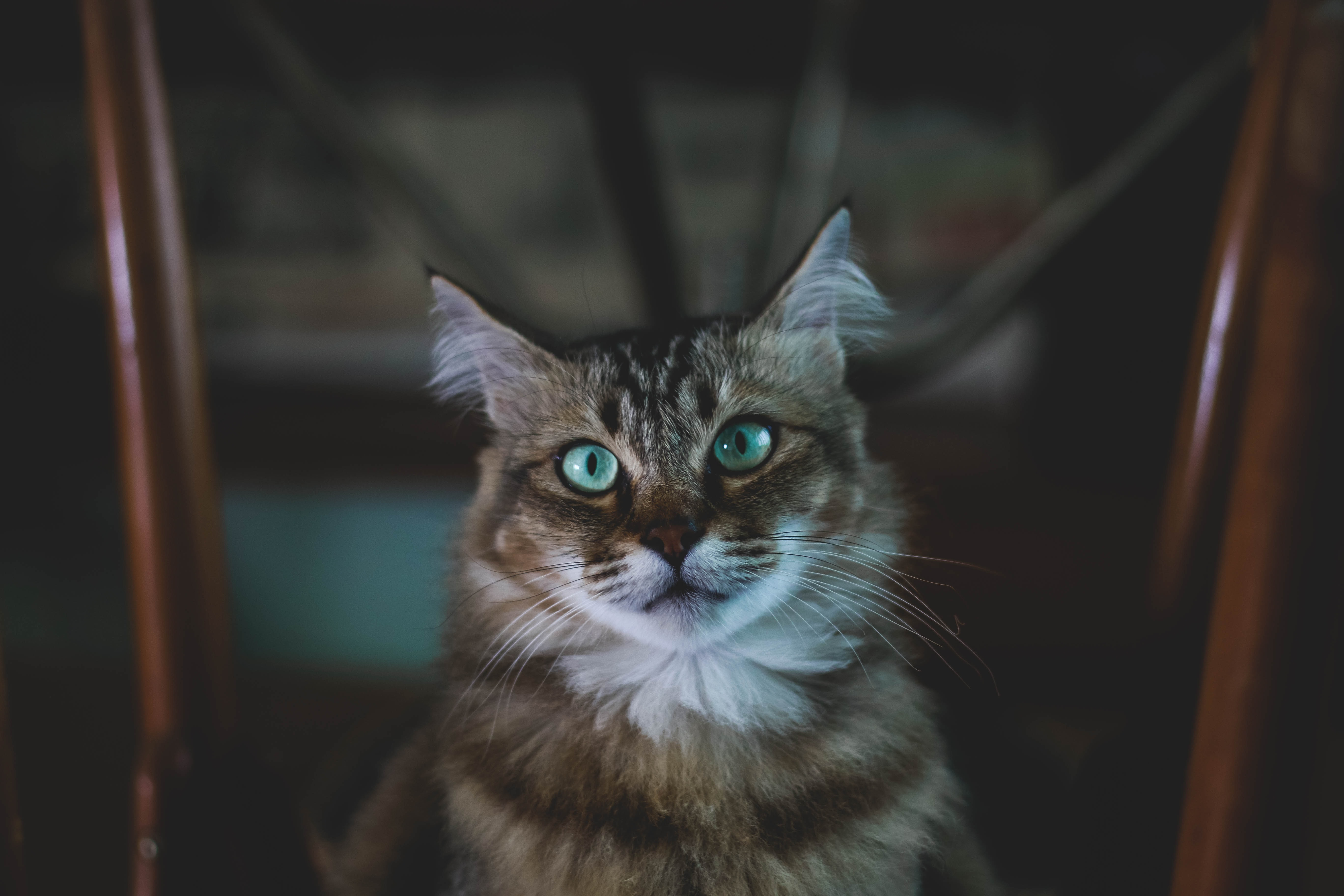 shallow focus photography of brown and white cat