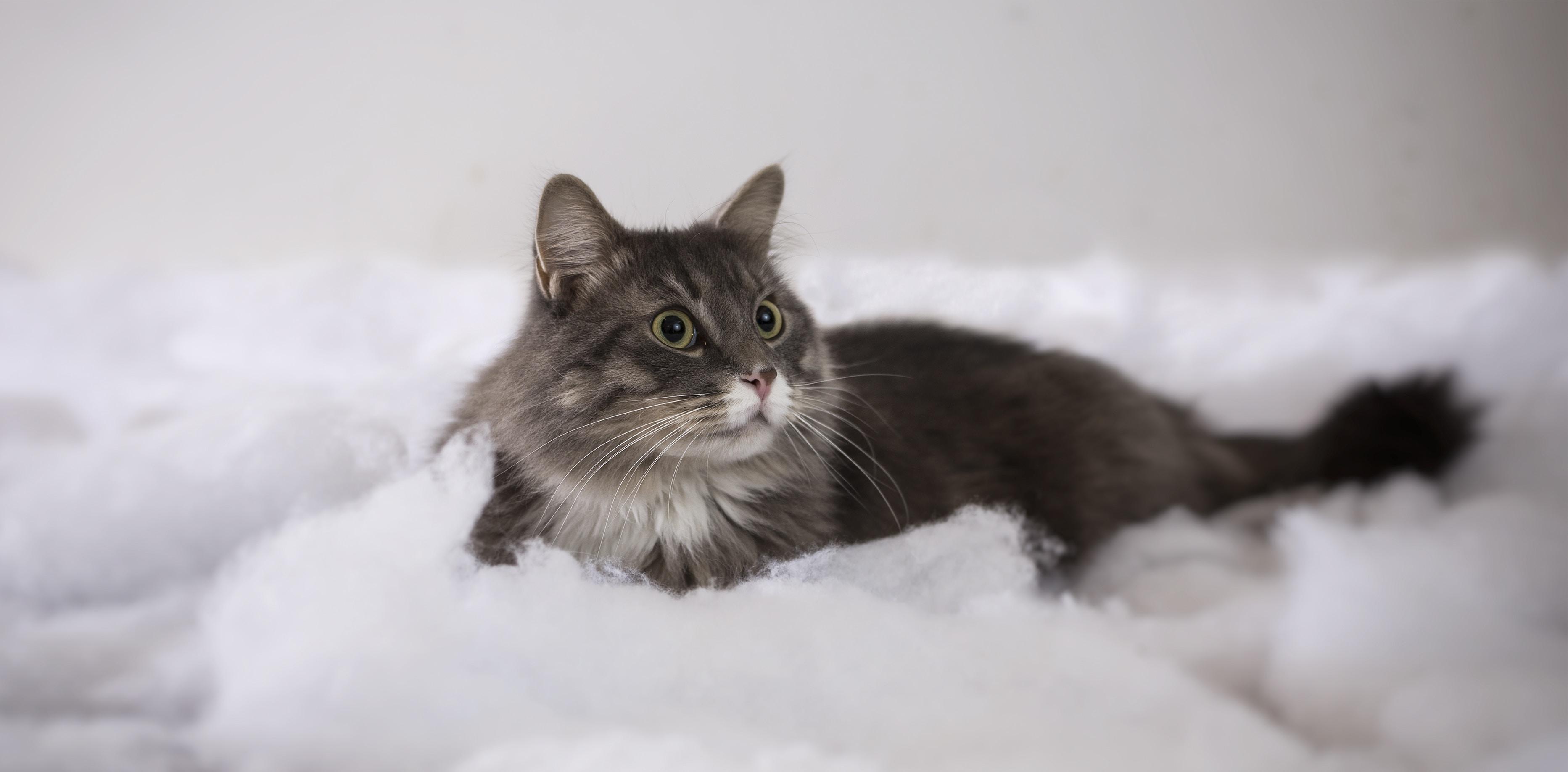 photo of short-haired black cat on foam
