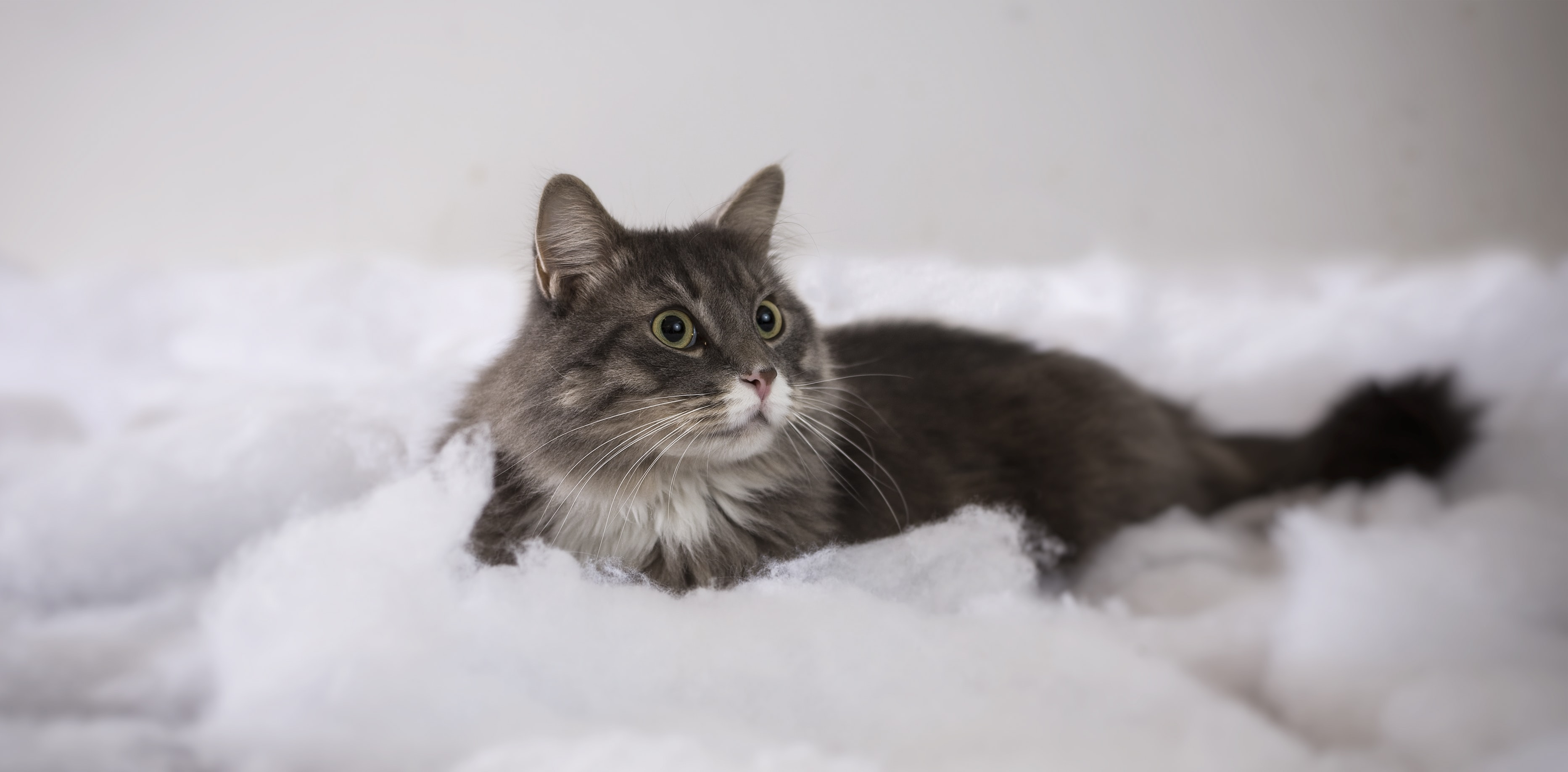 photo of short-haired black cat on foam