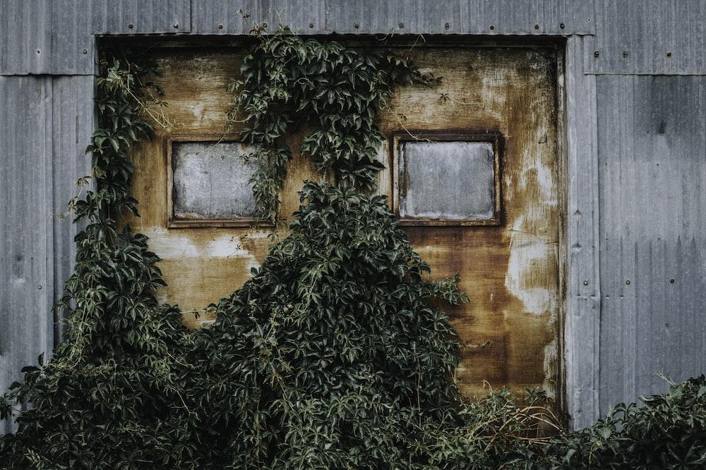 brown steel door covered with green vines