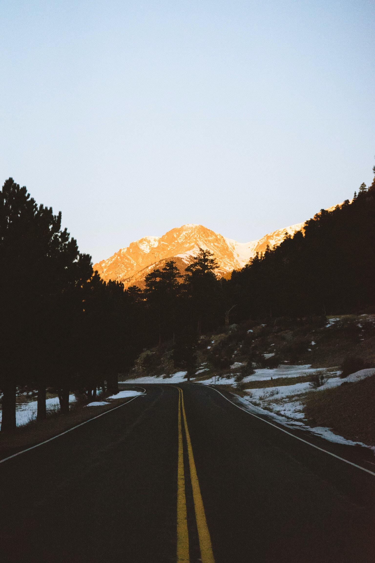 road in between of trees