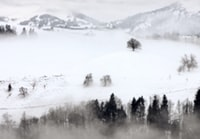 aerial photography of trees in snow