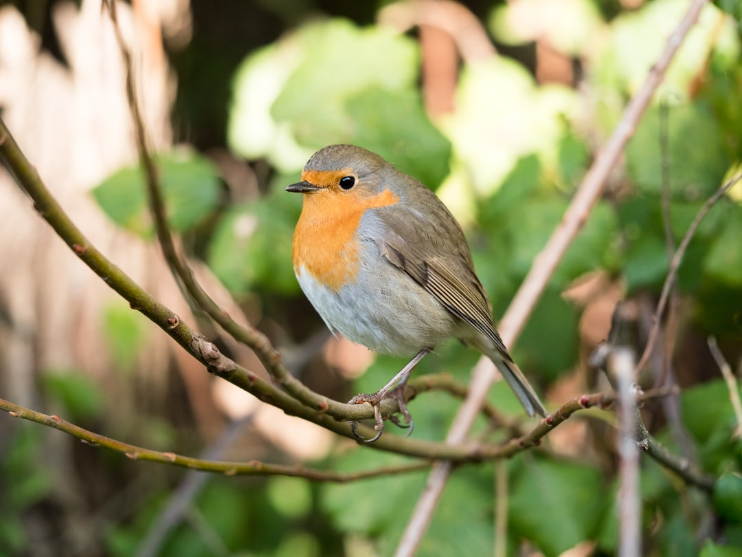 """I was just wandering around near """"ex snia"""" lake, in Rome hoping to take some good pictures. When saw this delicious robin I quickly mounted my olympus macro lens and then i shot at full aperture.  Panasonic lumix gx8  Olympus 60mm macro f/2.8"""
