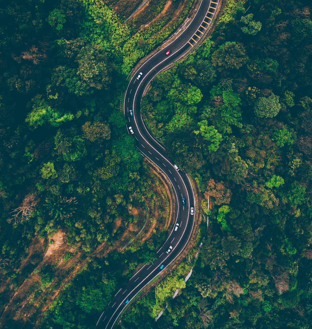 top view of cars on road surrounded by trees