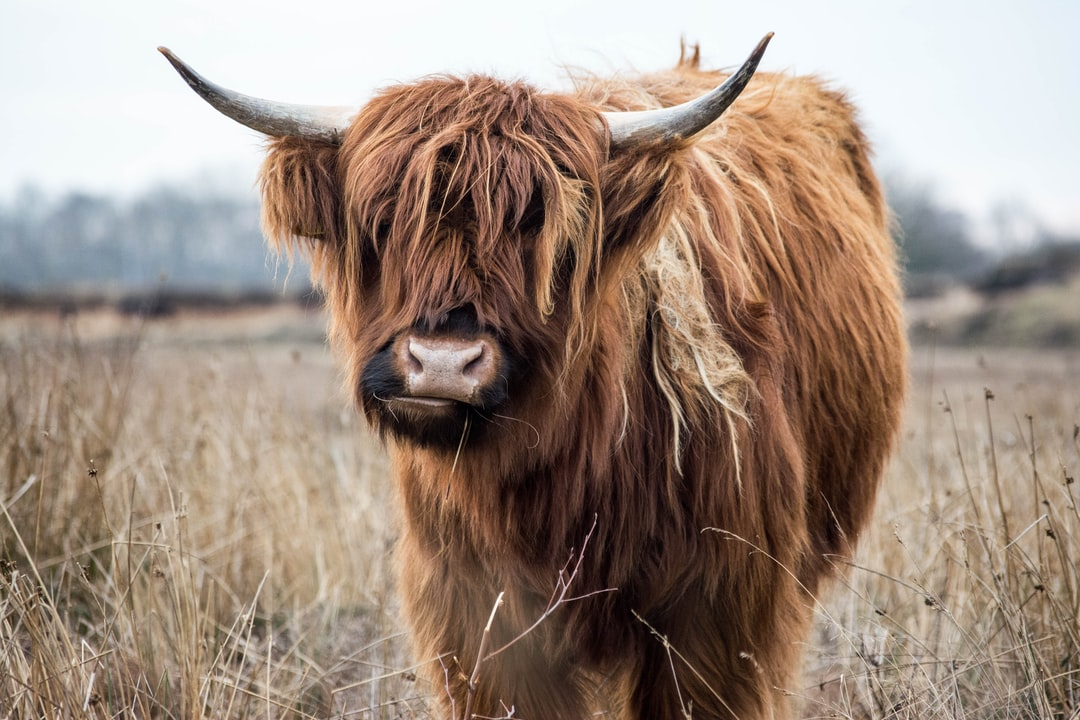 We were walking our dog, when we noticed this yak. I thought it would be a nice photograph so I took a photo.