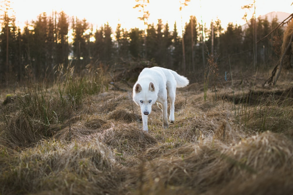 dog standing on dried grass