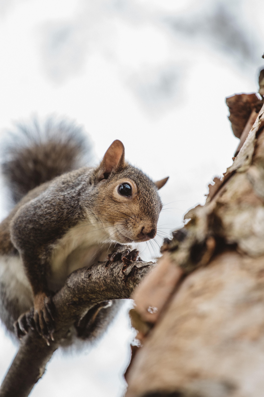brown squirrel near brown wooden trunk