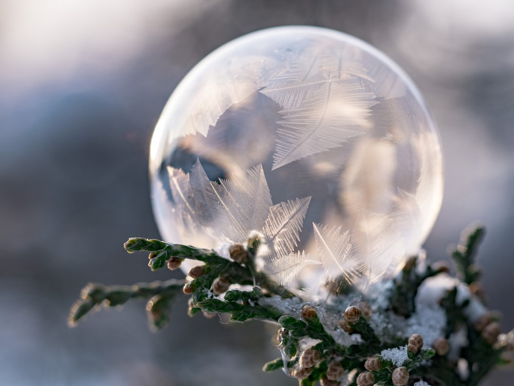 closeup photography of clear bubble on leaf tree