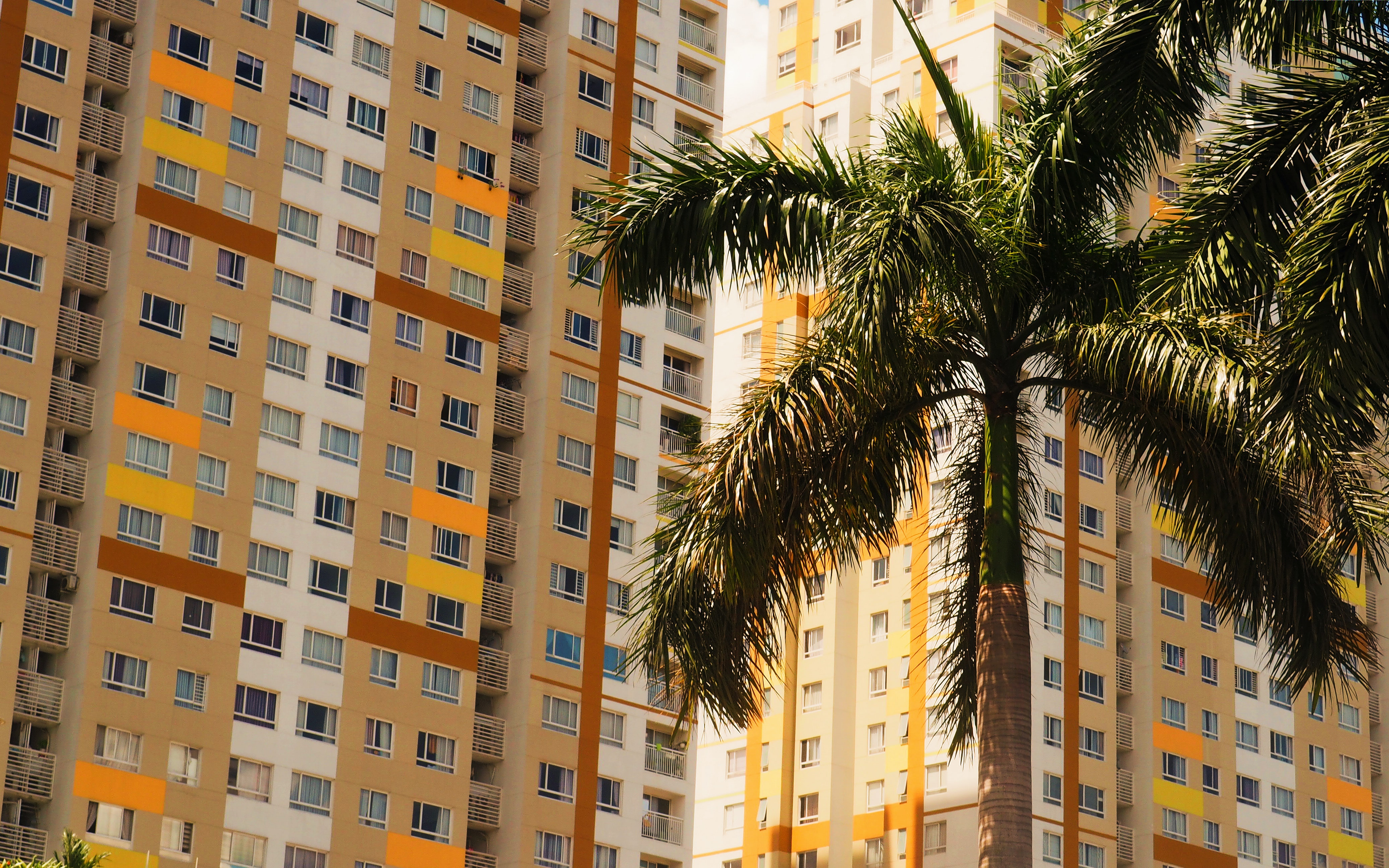 coconut tree near yellow and white buildings