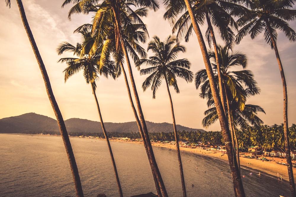 palm trees near seashore