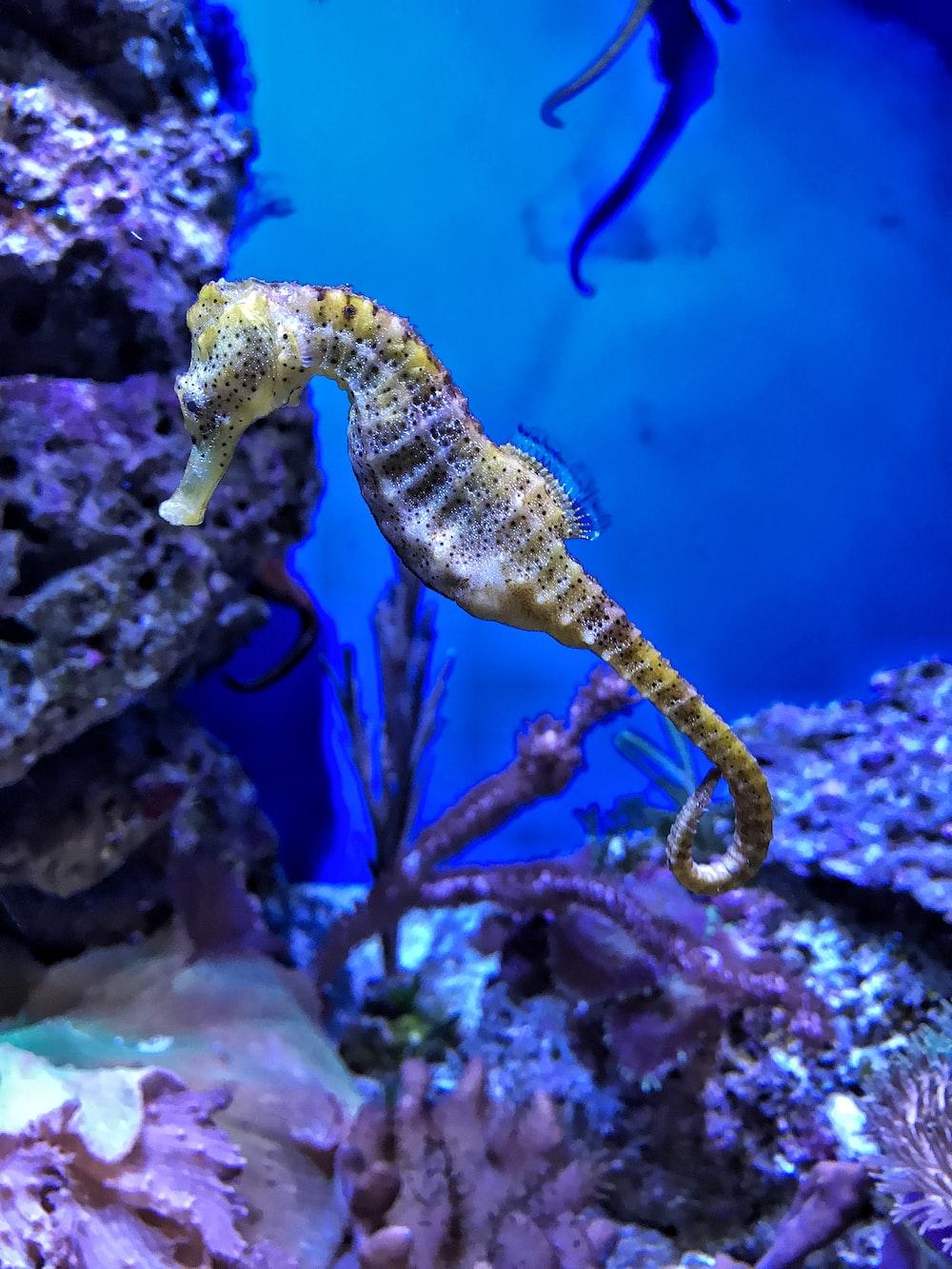closeup photography of yellow seahorse