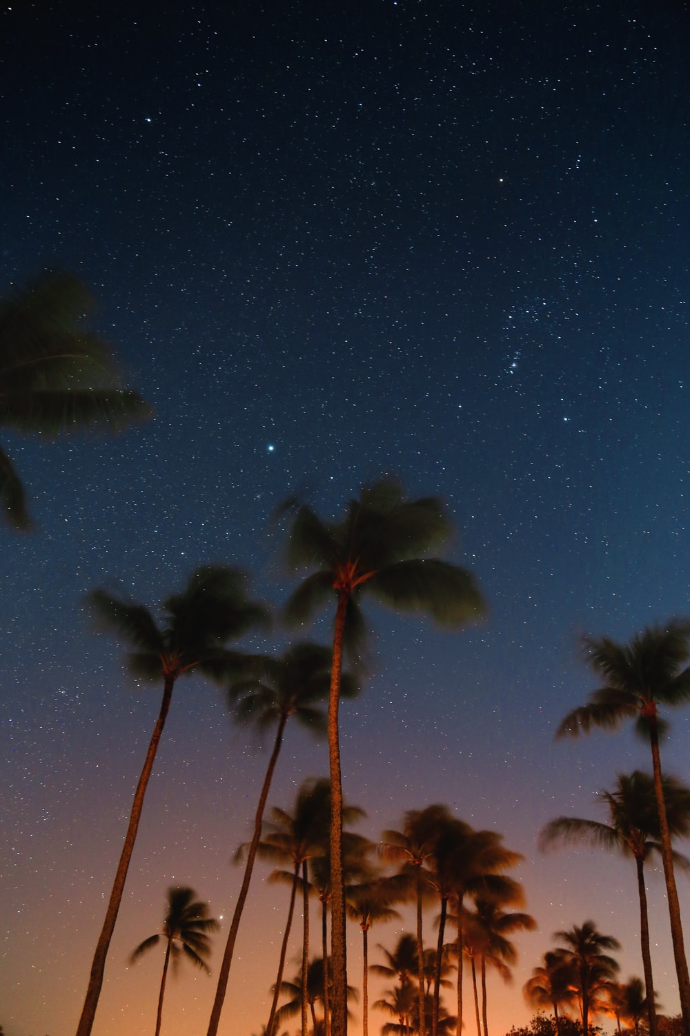low angle photography of coconut trees at nighttime