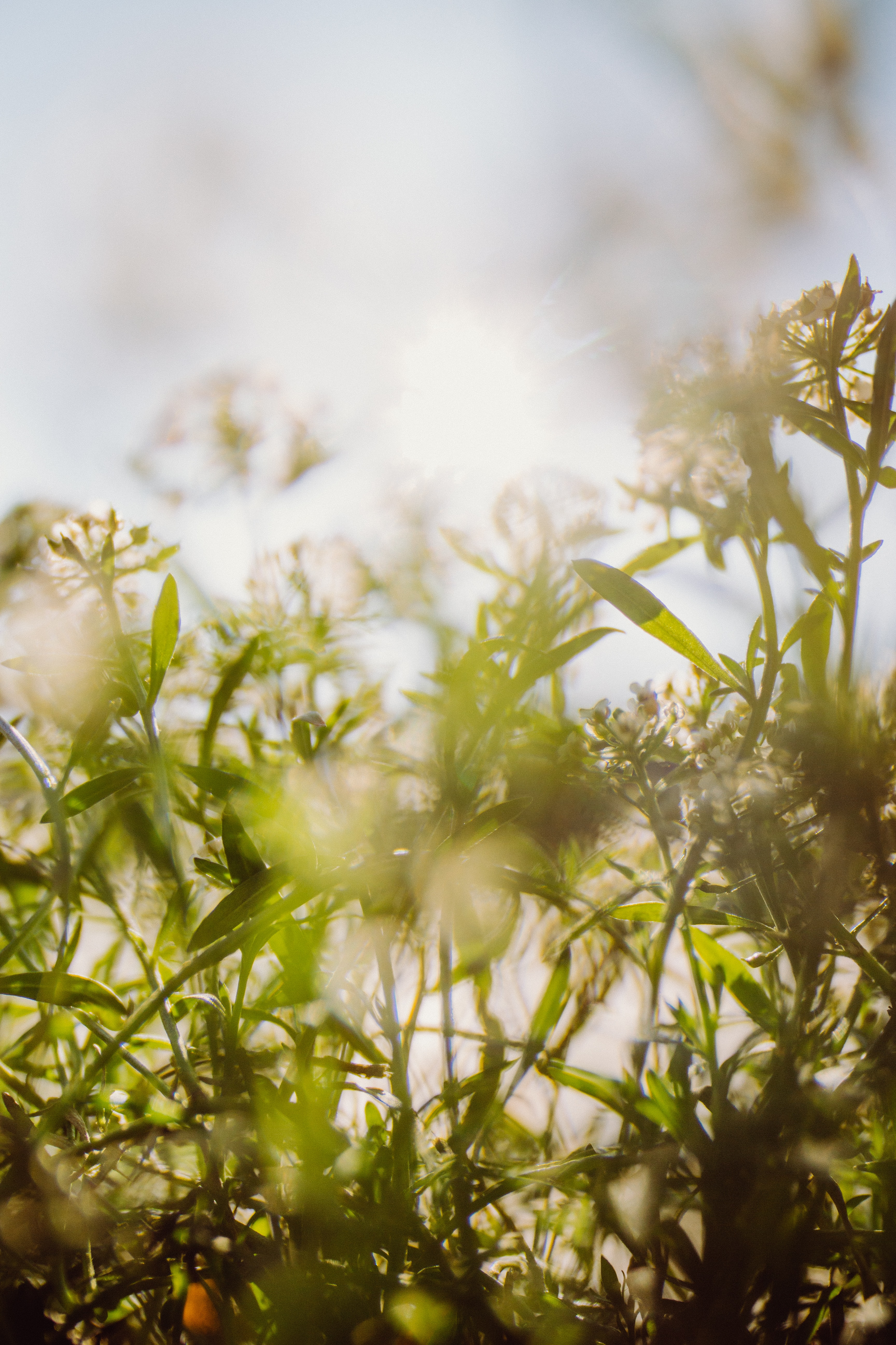 worm's eye view photo of white petaled flowers